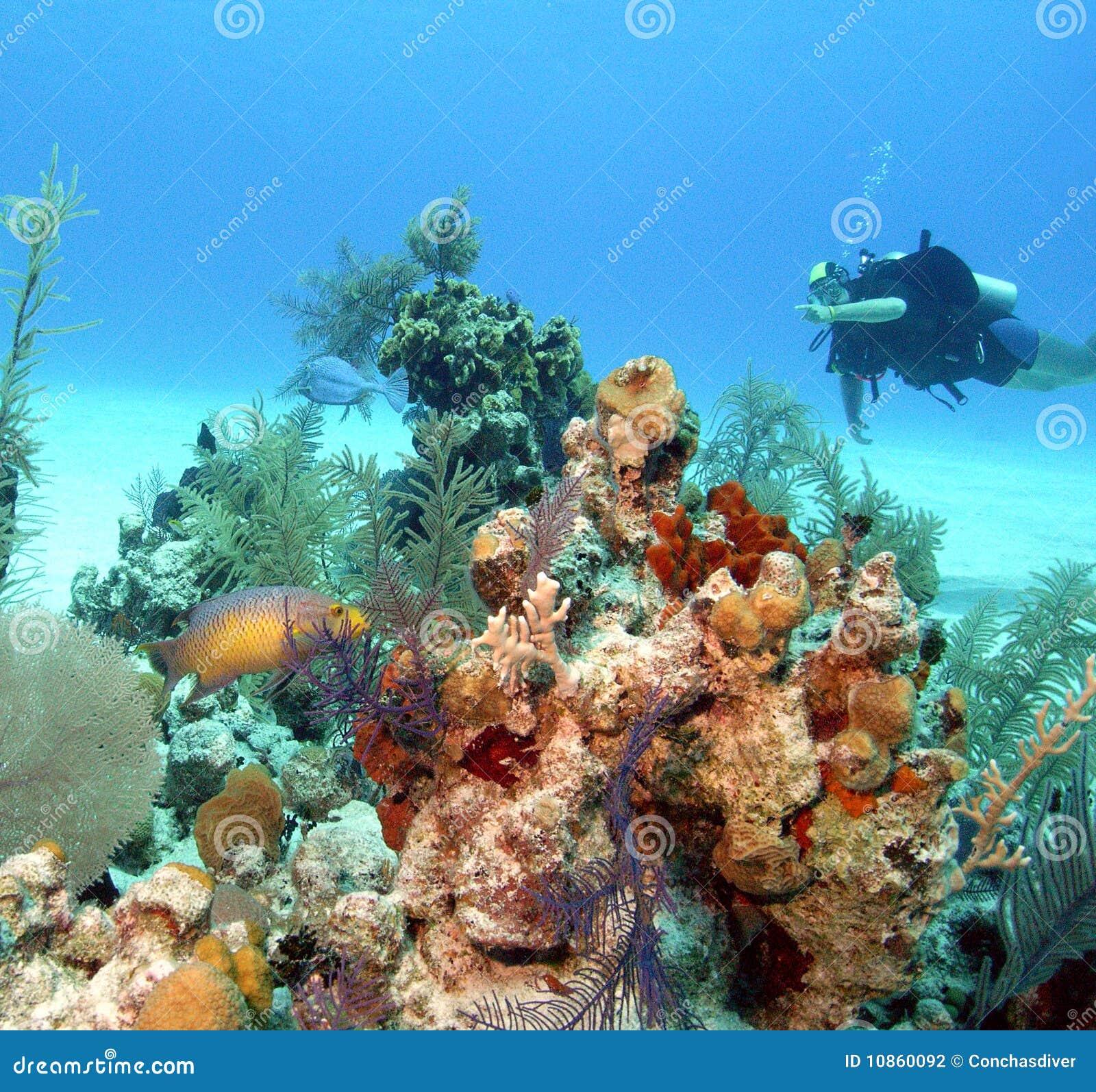 Μπαχάμες reeflife