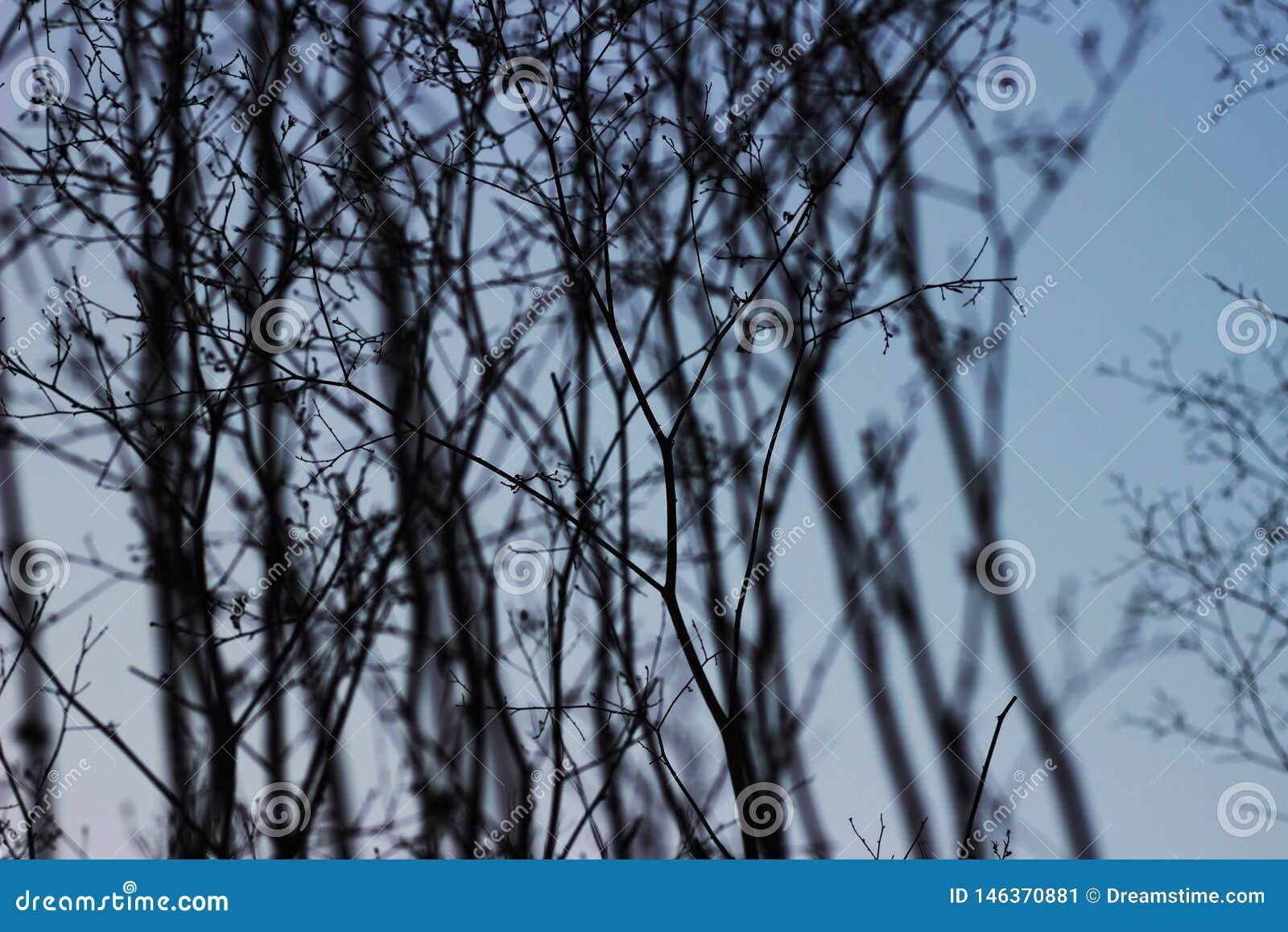 Μπλε ουρανός και εύθραυστοι κλαδίσκοι