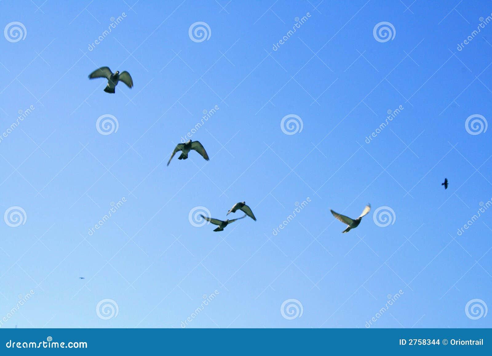 μπλε ουρανός πουλιών