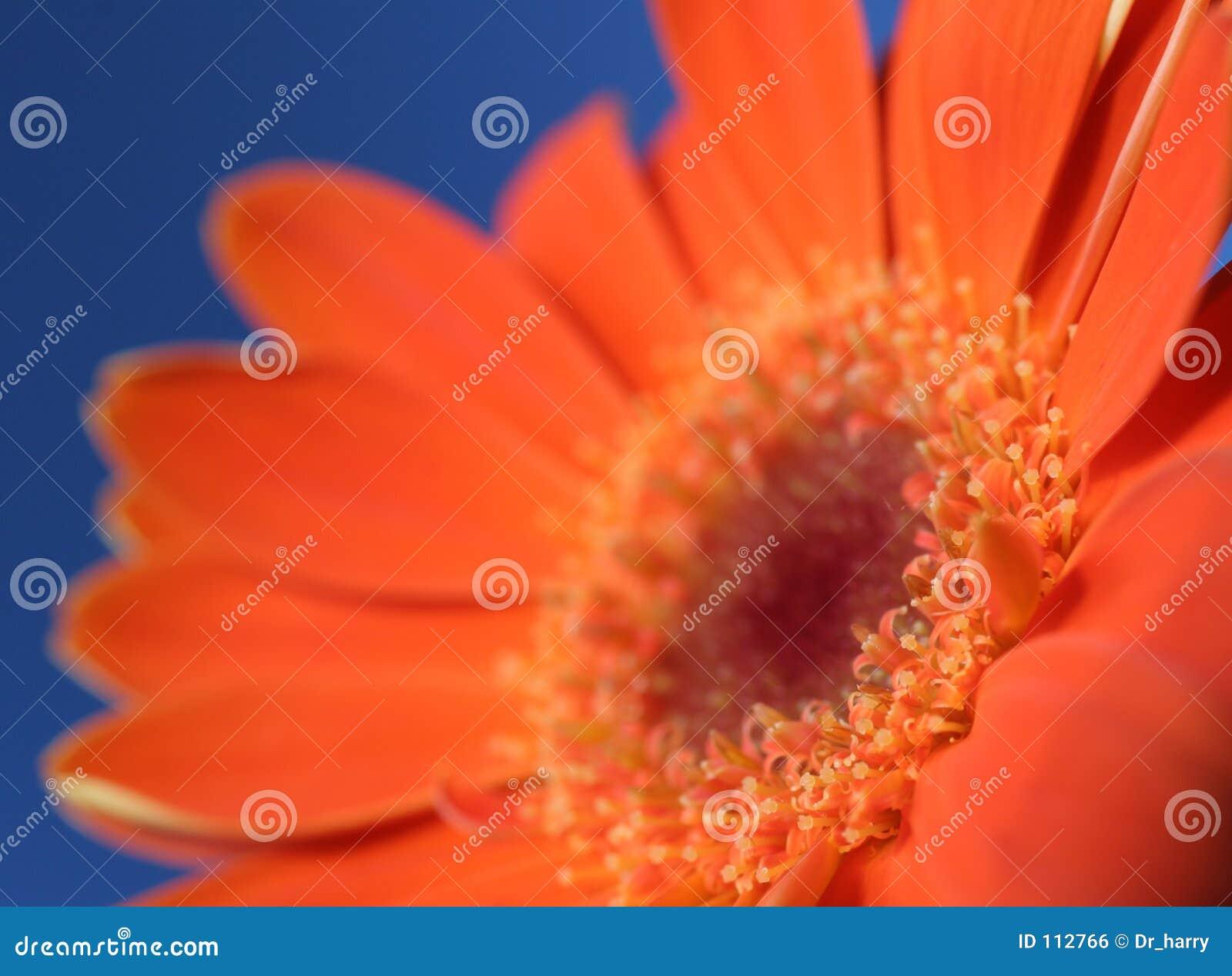 μπλε πορτοκάλι 3