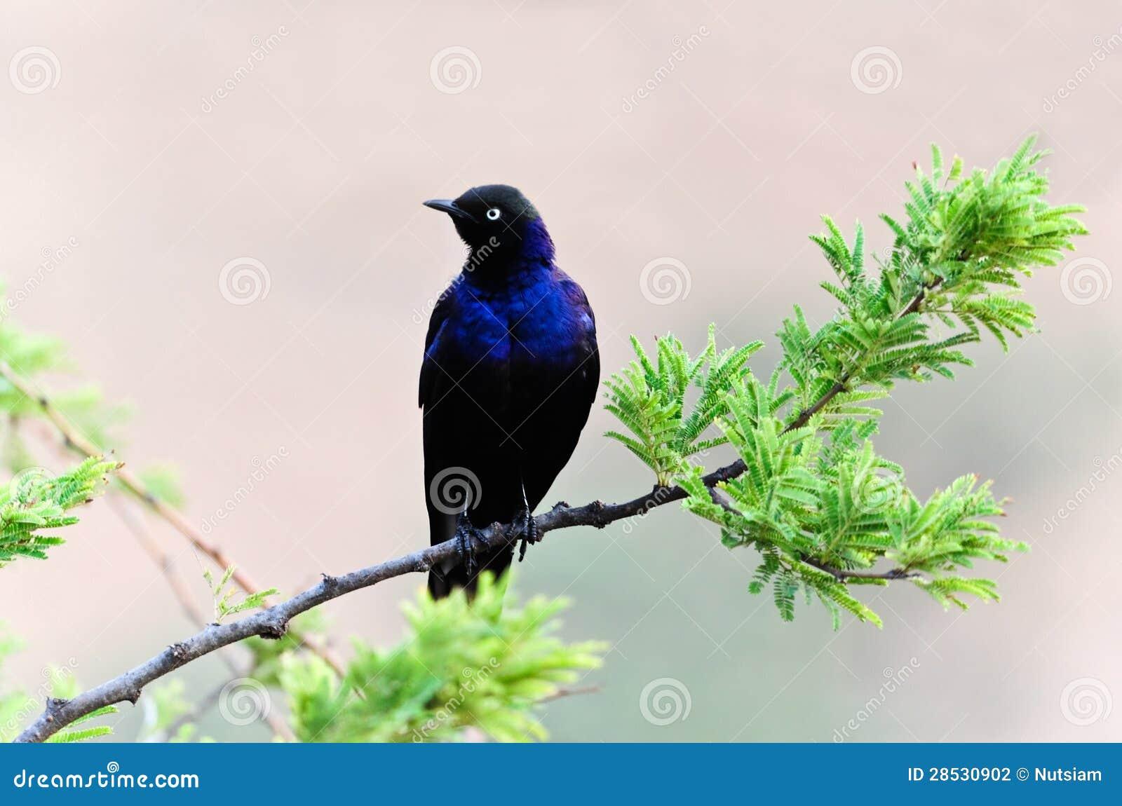 Μια εικόνα πουλί