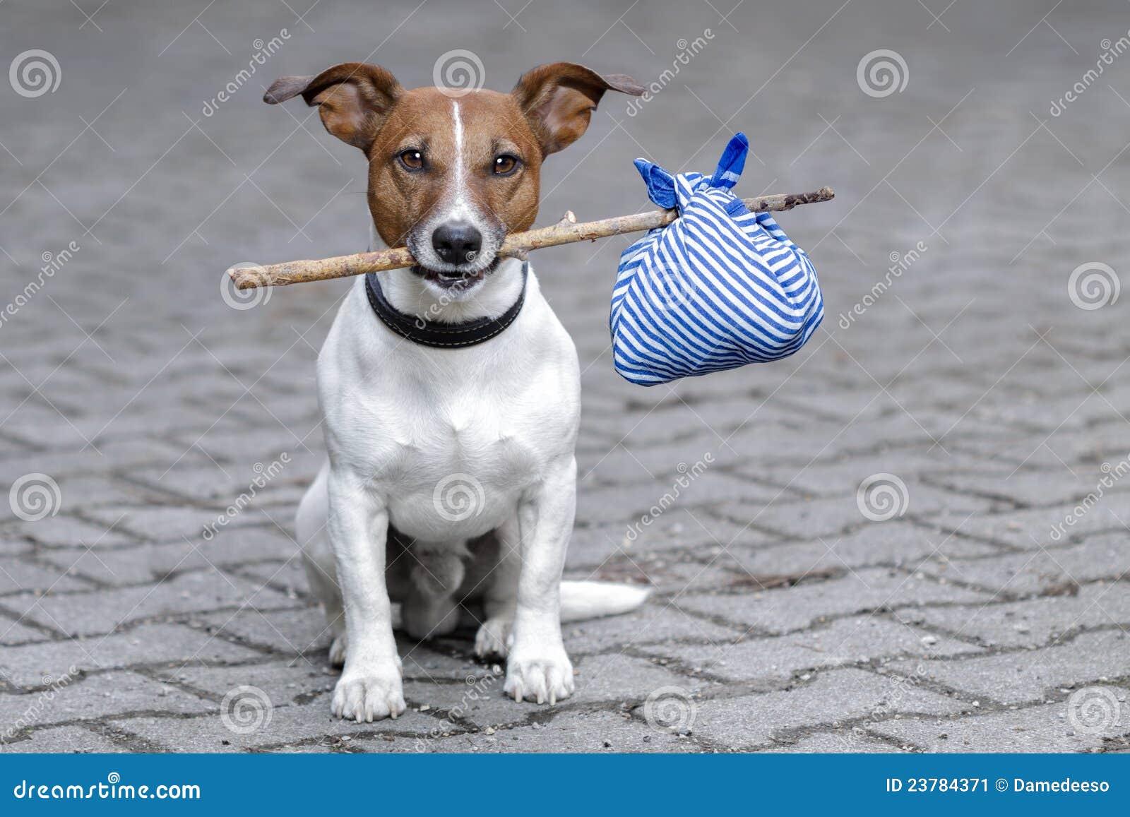 μπλε σκυλί τσαντών