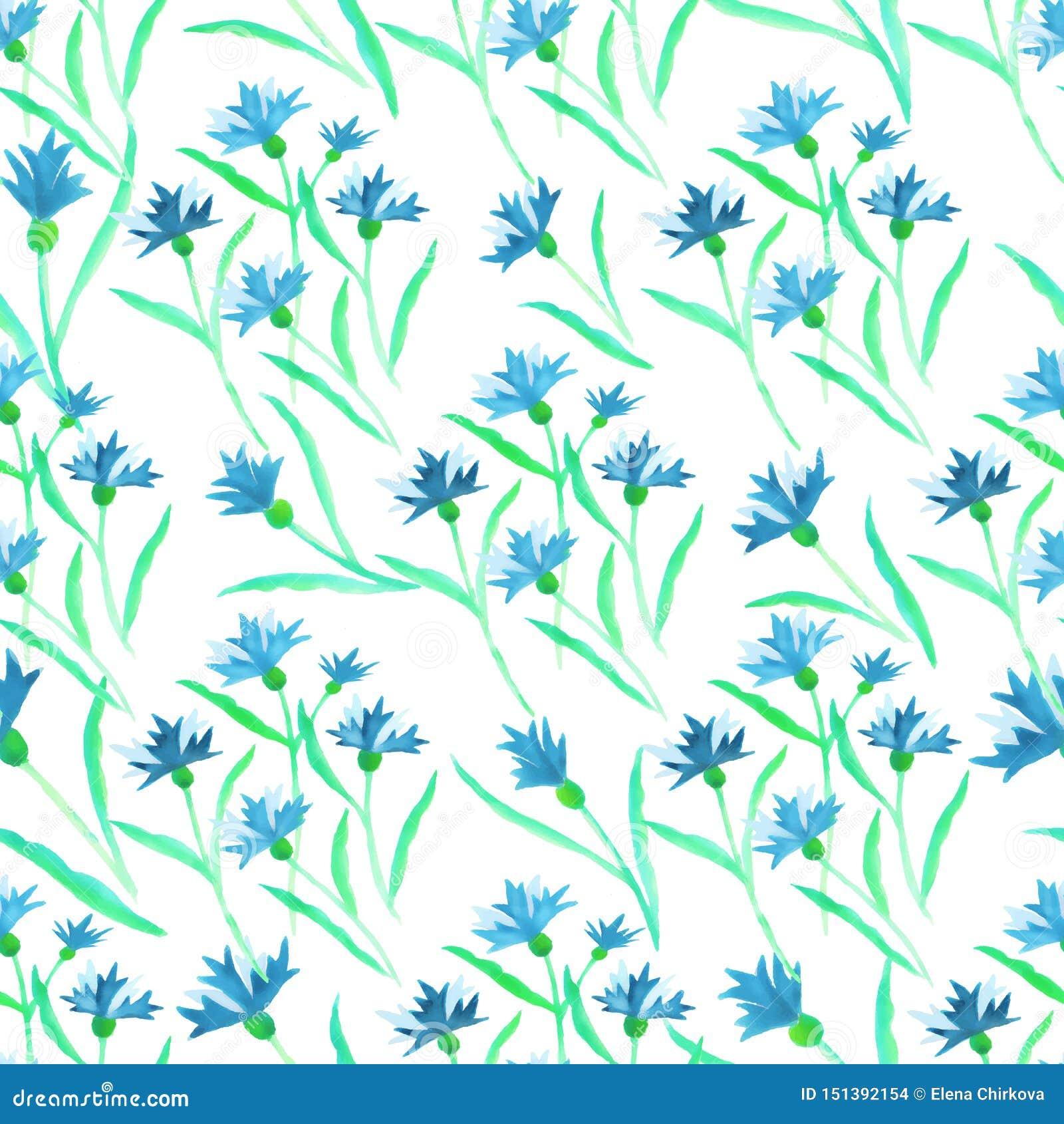 Μπλε σύνορα cornflower watercolor σχεδίων στο λευκό