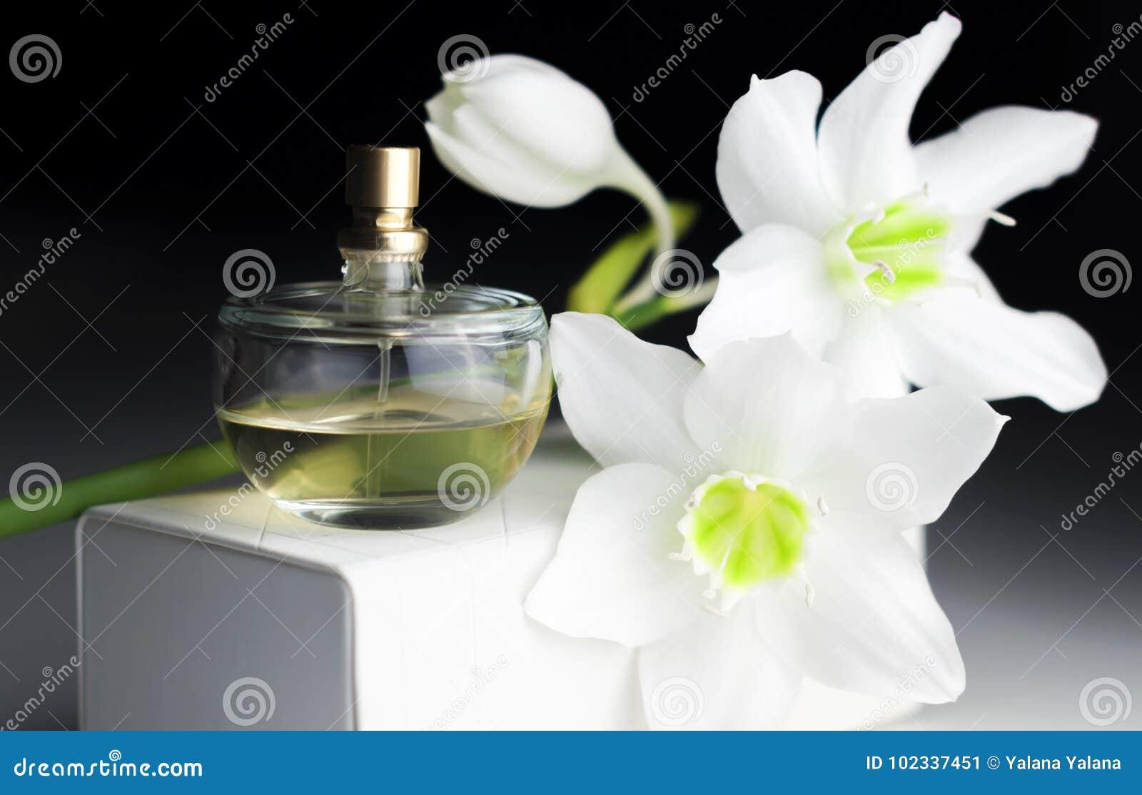 Μπουκάλι του αρώματος, άσπρο daffodil σε ένα σκοτεινό υπόβαθρο