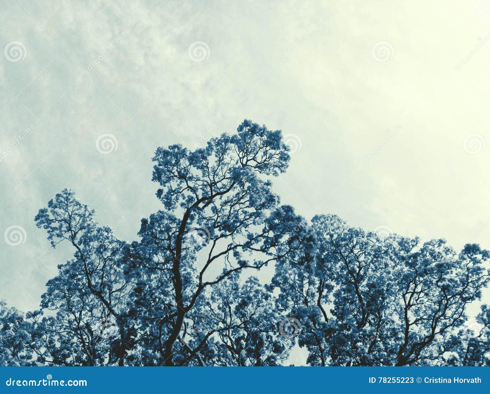 μπλε δέντρο