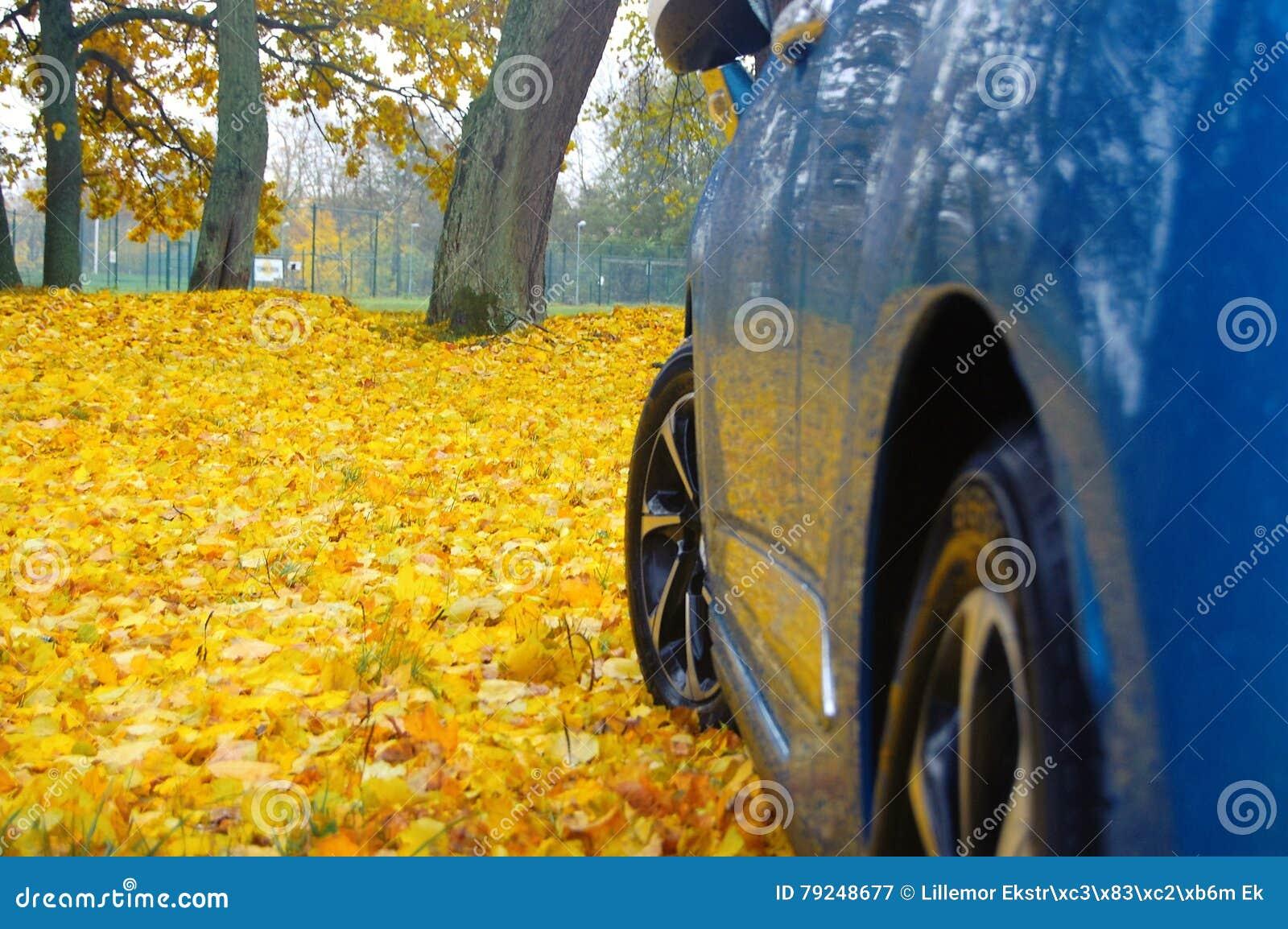 Μπλε και κίτρινο φθινόπωρο