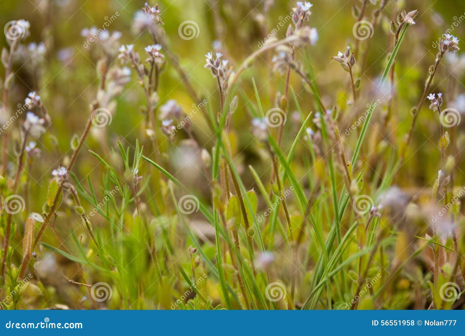 Download Μπλε λουλούδια προς το λιβάδι Στοκ Εικόνες - εικόνα από φρέσκος, χρώμα: 56551958