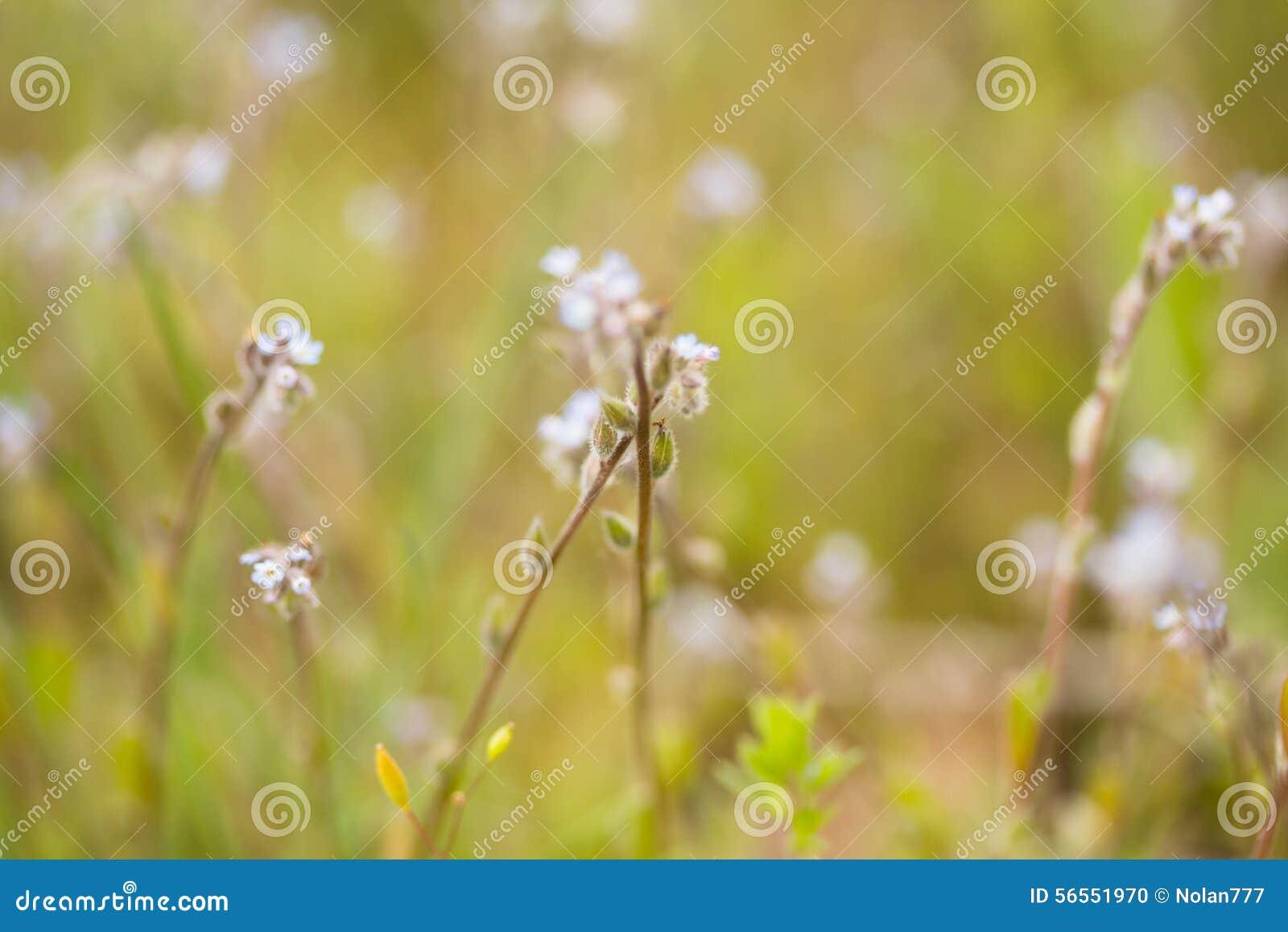 Download Μπλε λουλούδια προς το λιβάδι Στοκ Εικόνες - εικόνα από floral, αρκετά: 56551970