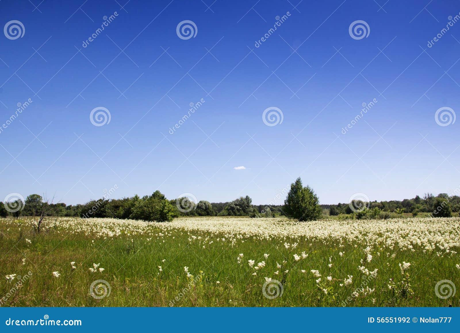 Download Μπλε λουλούδια προς το λιβάδι Στοκ Εικόνες - εικόνα από μακροεντολή, ημέρα: 56551992