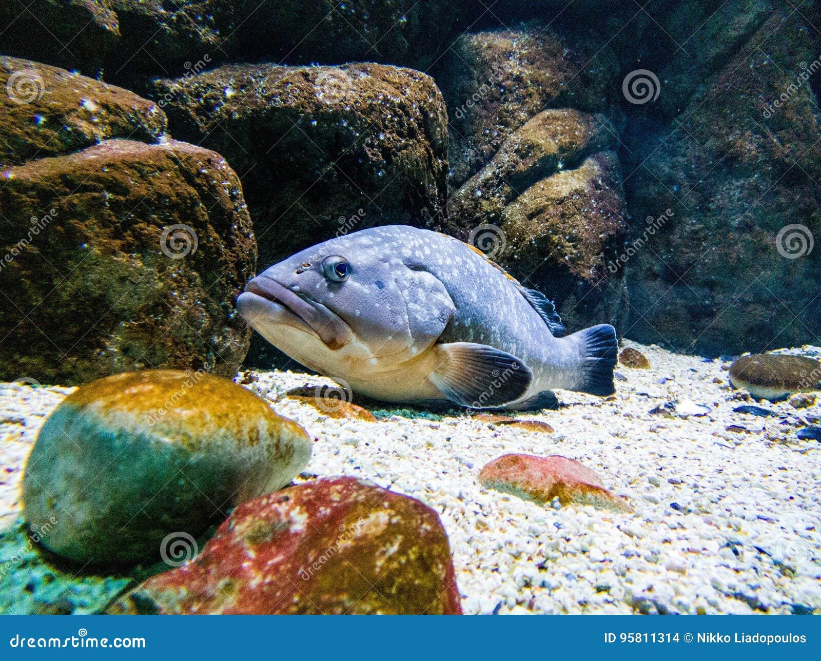 Μπλε στήριξη ψαριών