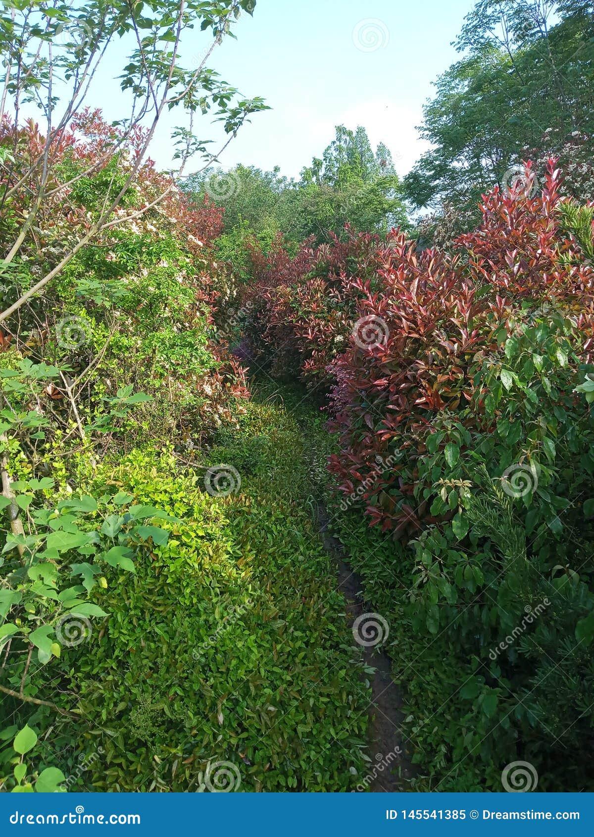 Μυστικός δρόμος που περιβάλλεται από τα λουλούδια και τα δέντρα