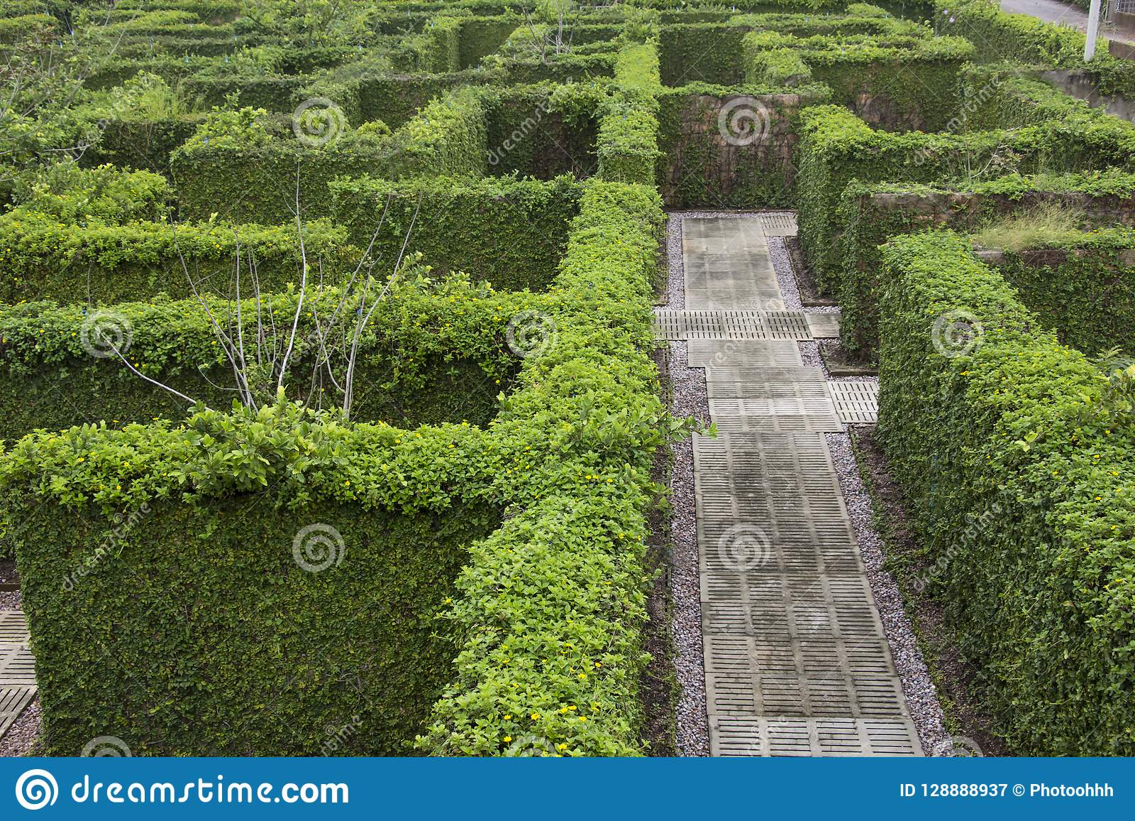 Μυστικός κήπος Wanderers