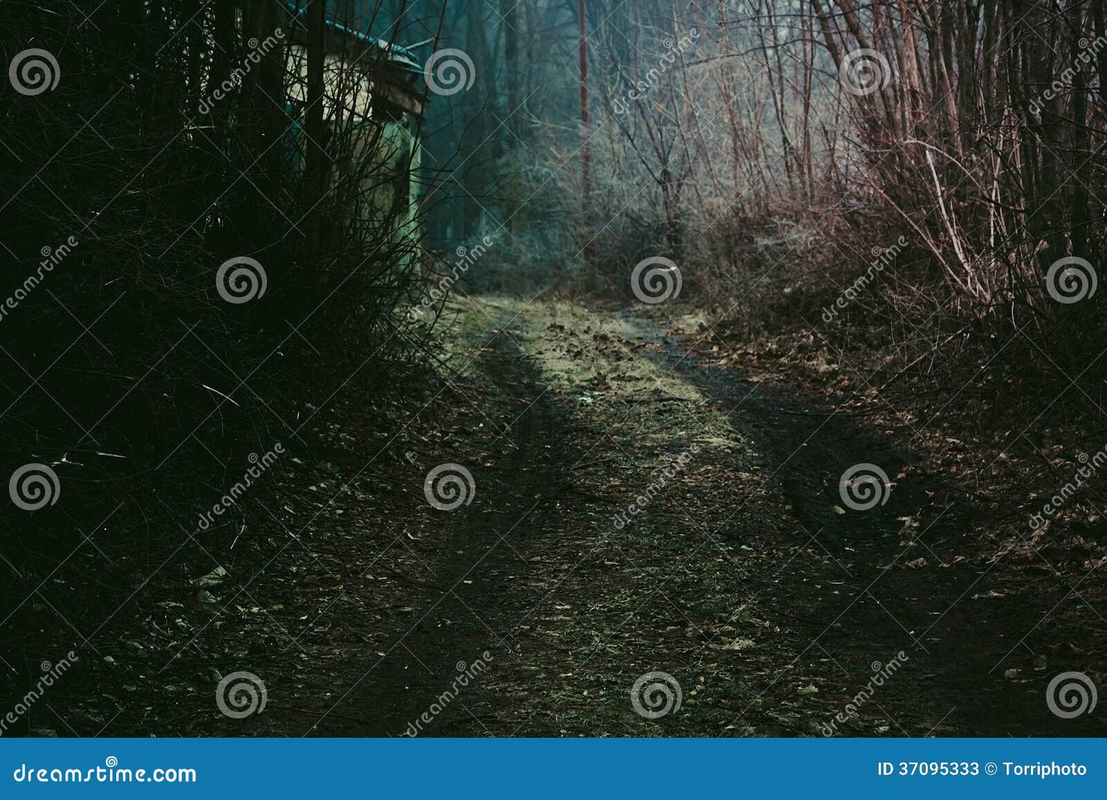Μυστικός σκοτεινός δασικός δρόμος