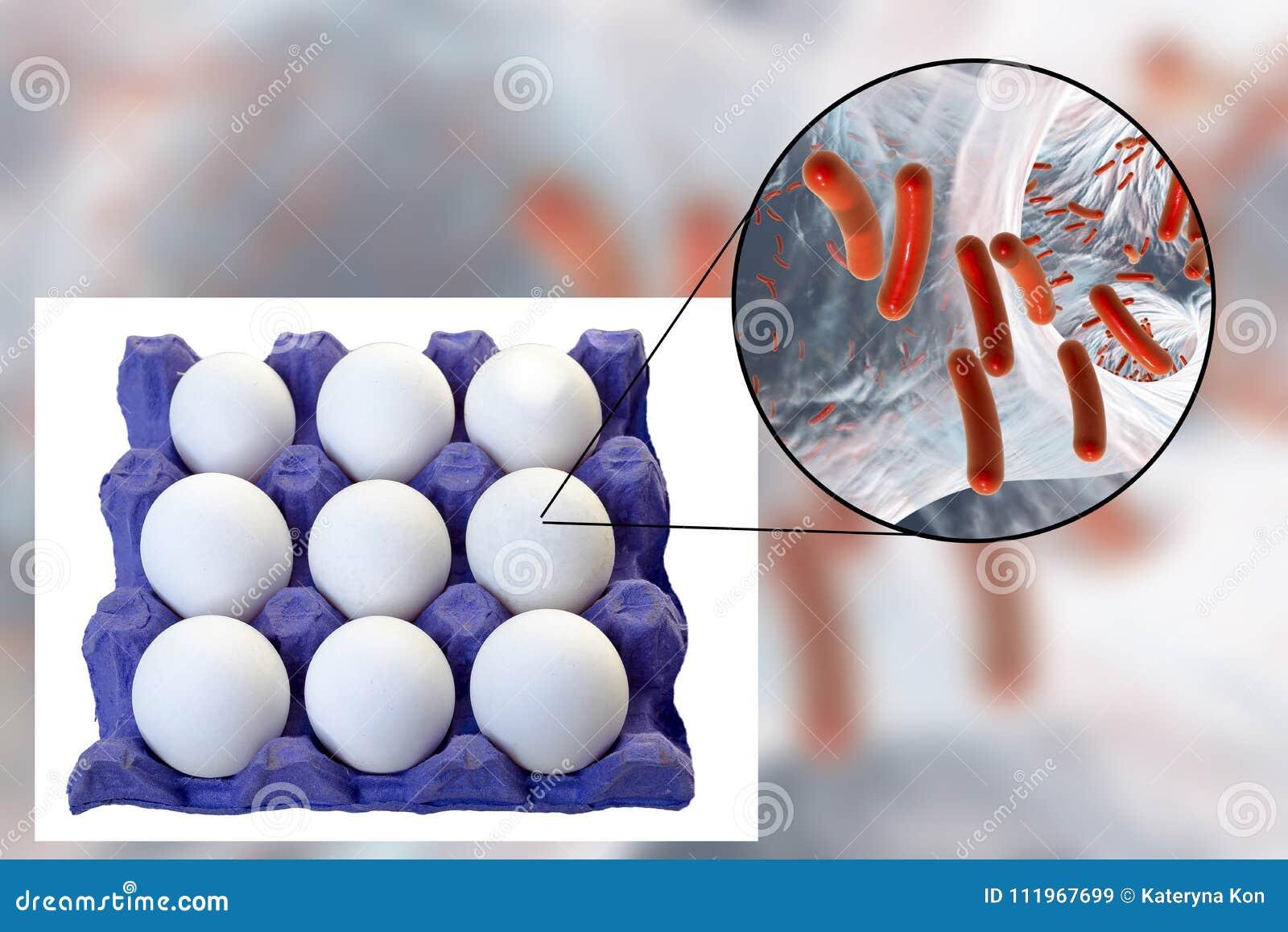 Μόλυνση των αυγών με τα βακτηρίδια, ιατρική έννοια για τη μετάδοση των μολύνσεων τροφίμων μέσω των αυγών