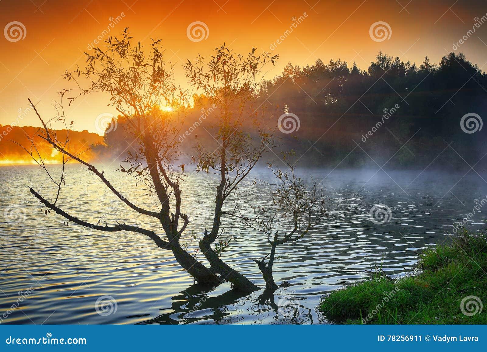 Μόνη ανάπτυξη δέντρων σε μια λίμνη στην ανατολή