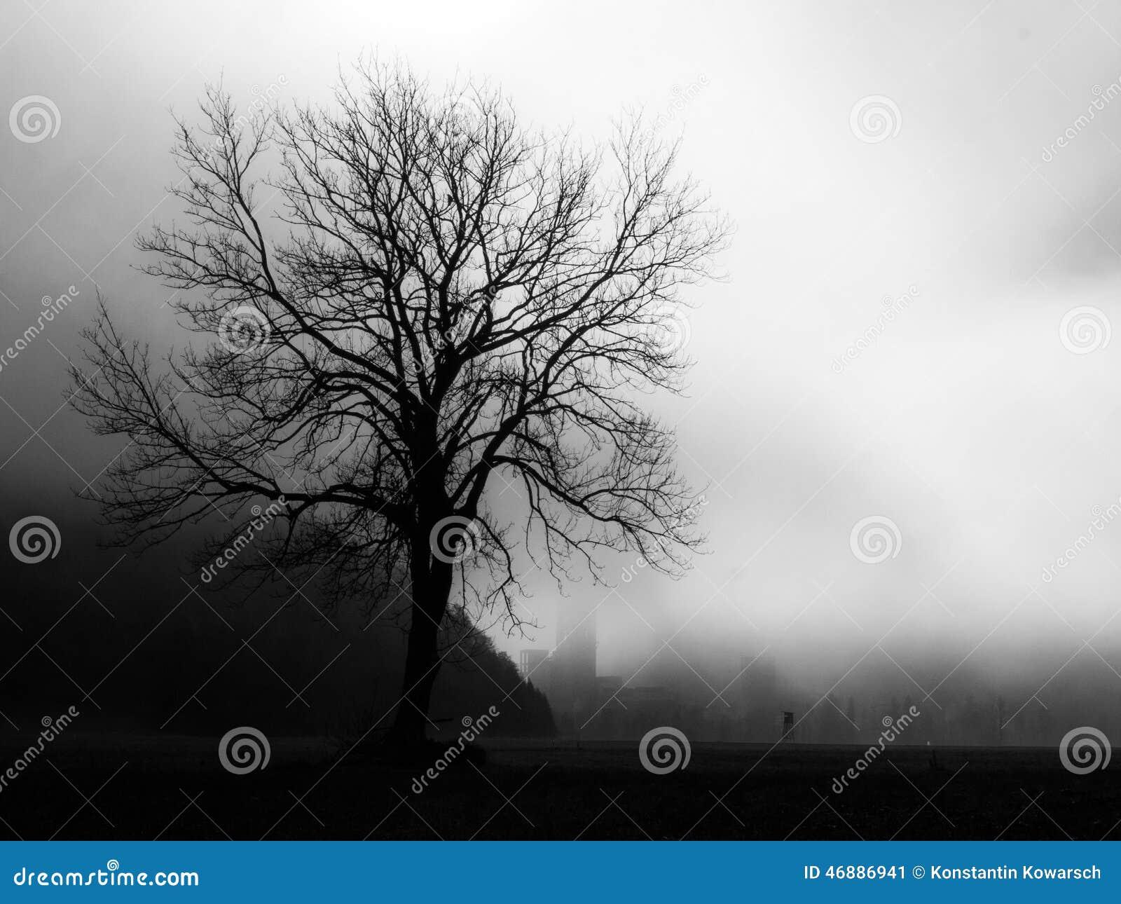 Μόνο δέντρο με και ομίχλη σε γραπτό
