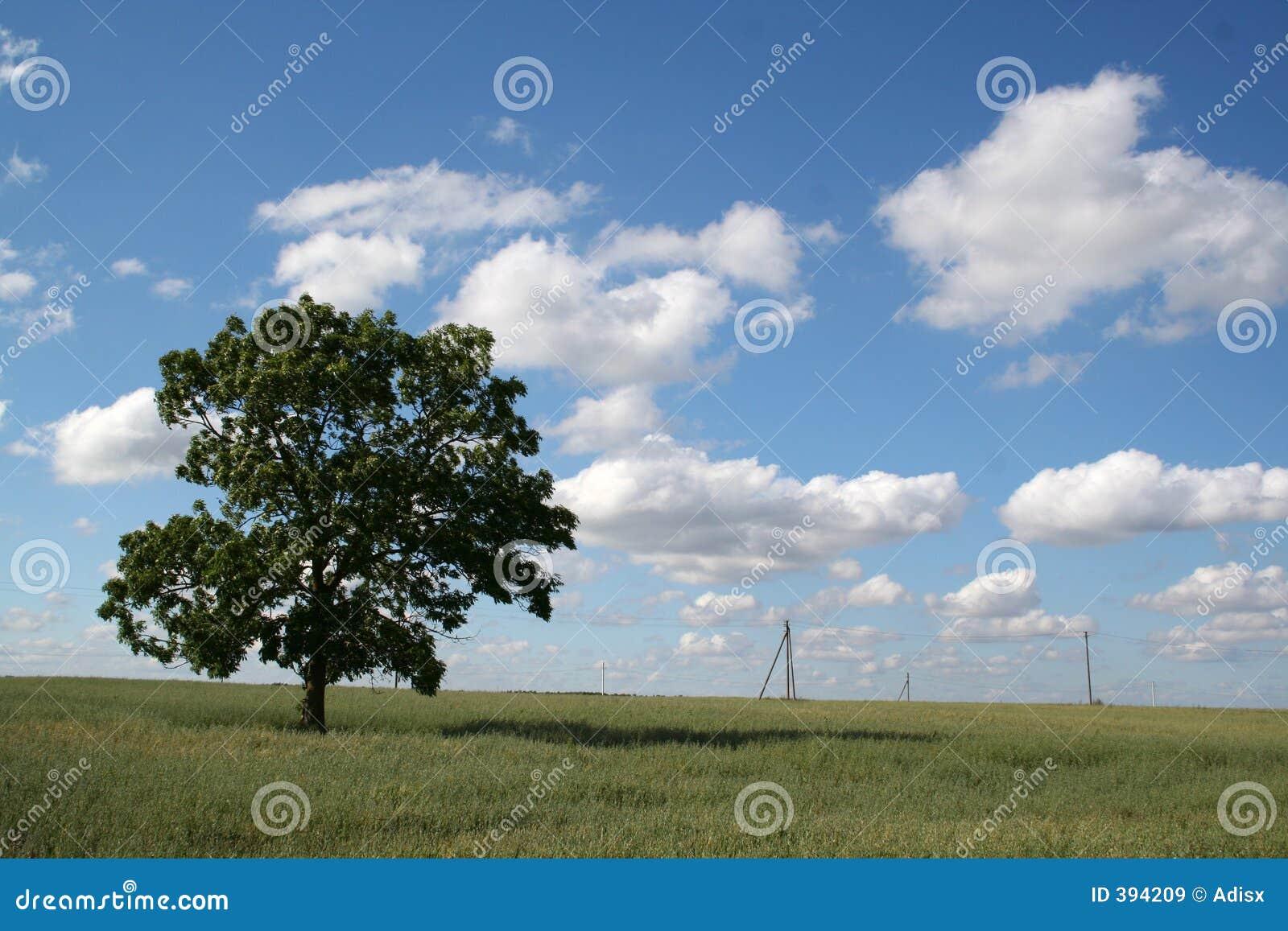 μόνο δέντρο πεδίων