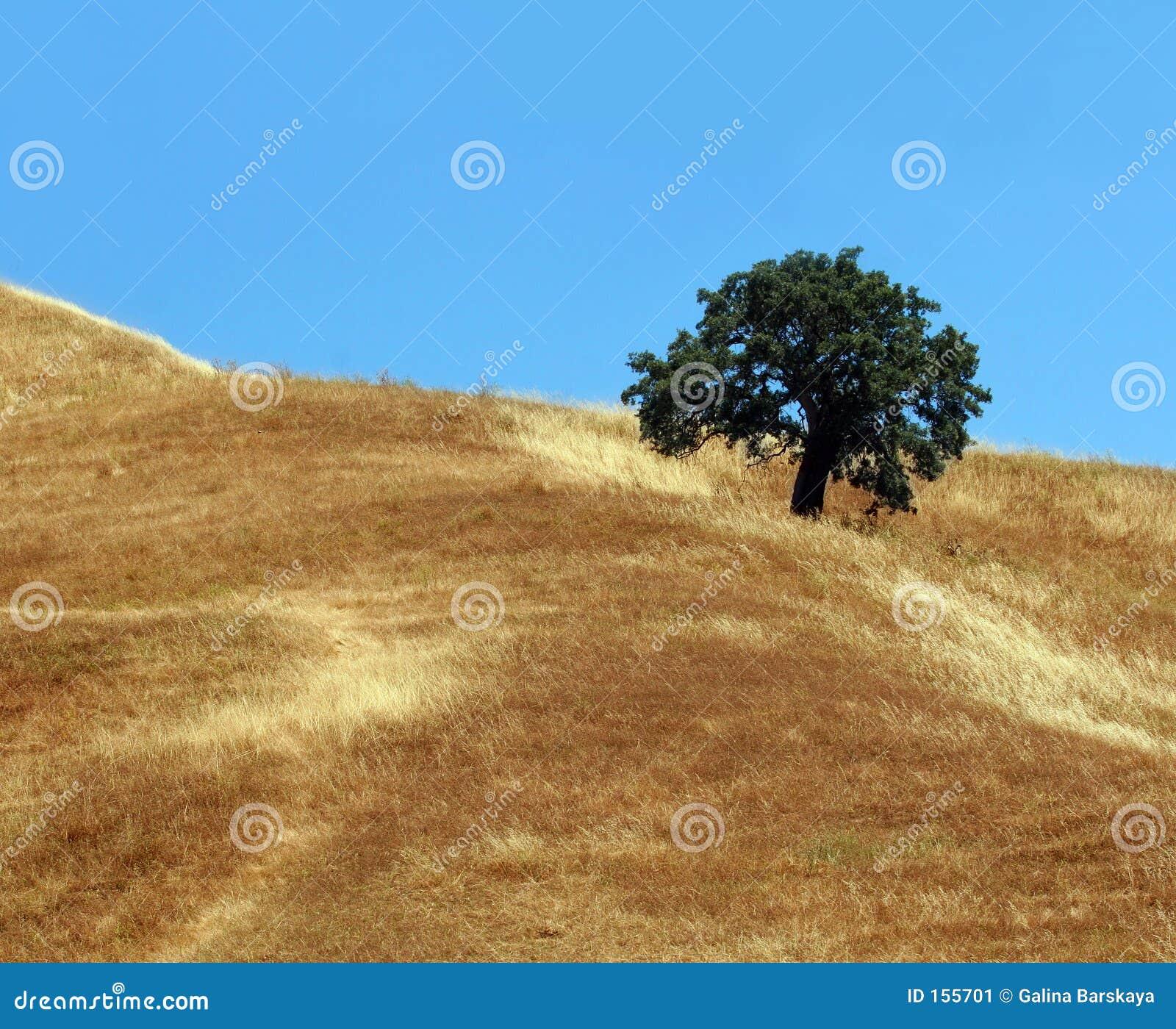 μόνο δέντρο