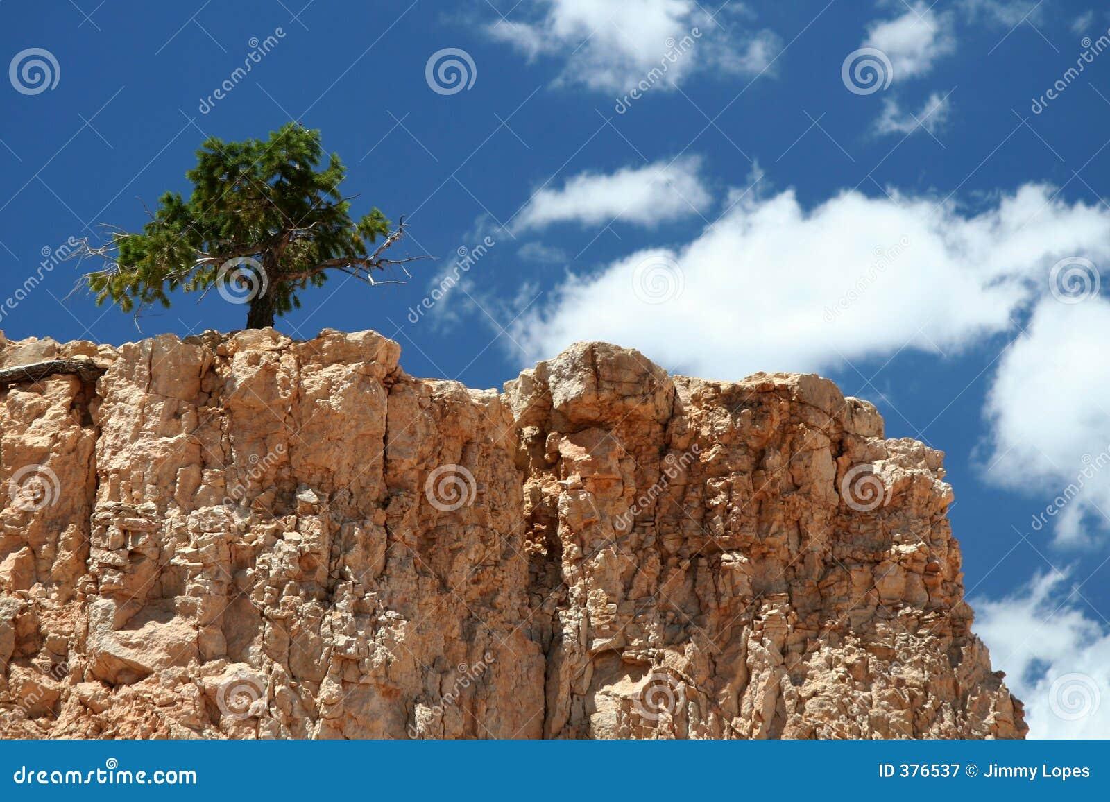 μόνο κορυφαίο δέντρο βου&n