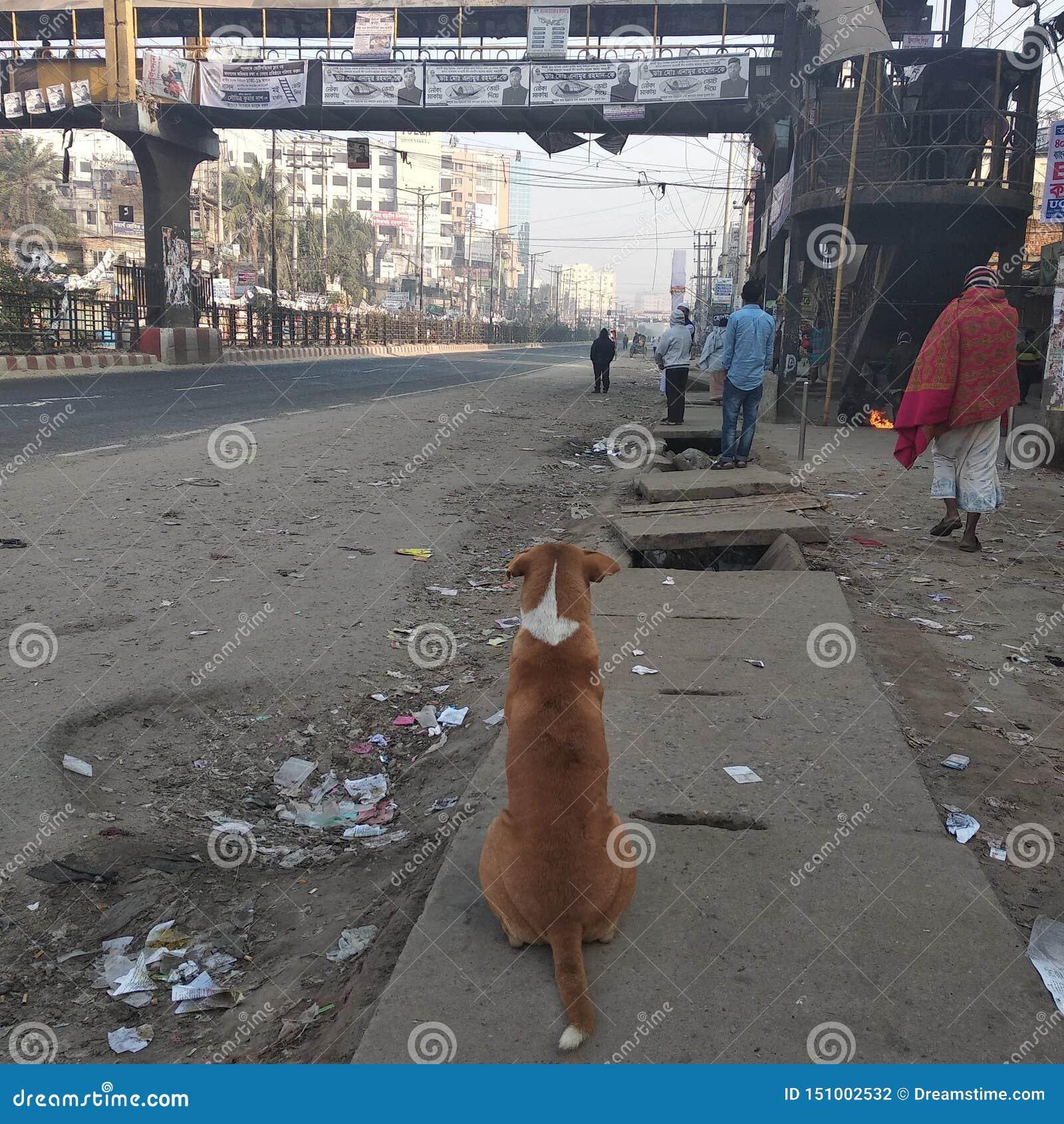 Μόνο σκυλί