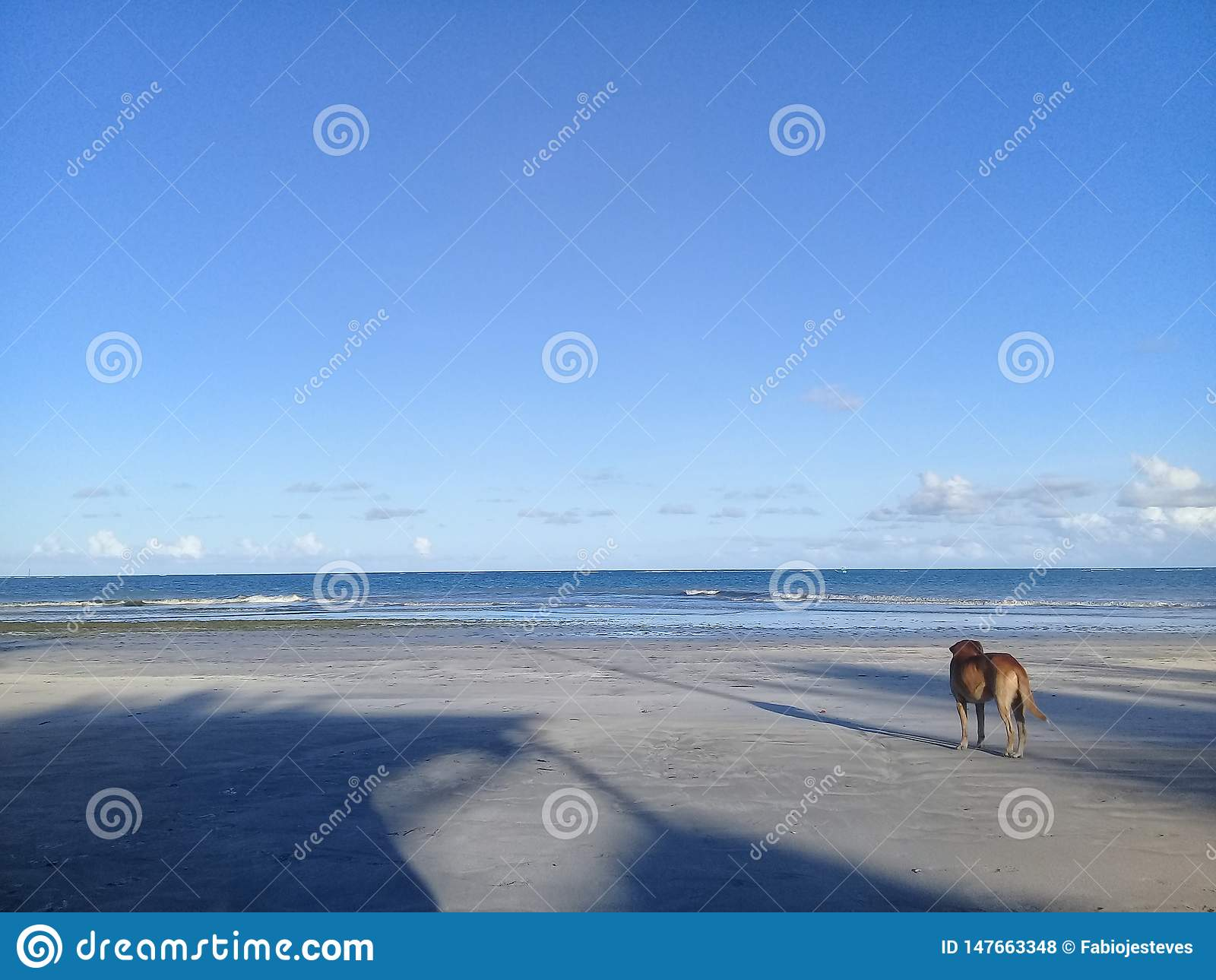 Μόνο σκυλί στην παραλία