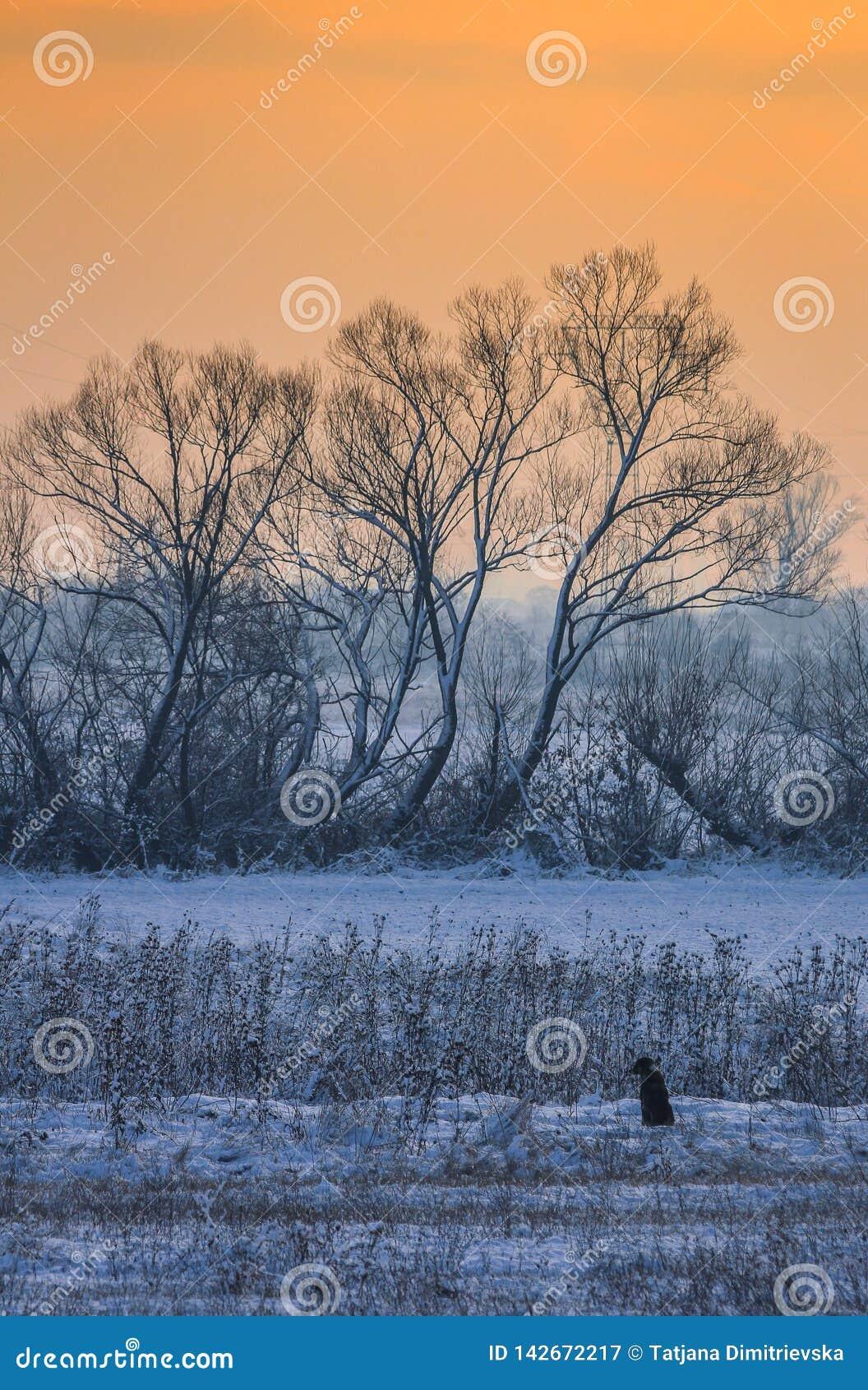 Μόνο σκυλί στο τοπίο χειμερινού πρωινού