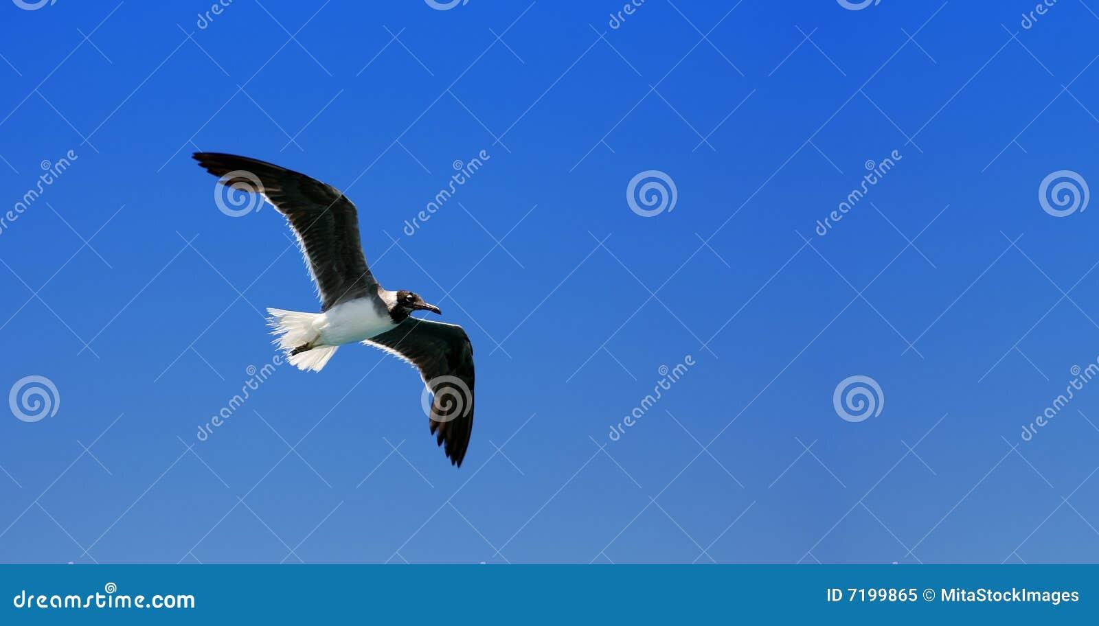 μύγα πουλιών