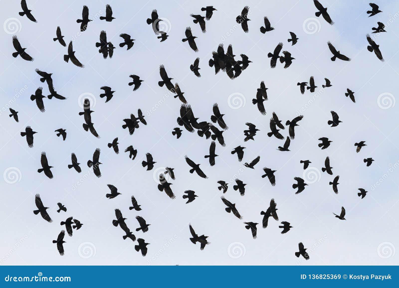 Μύγα πουλιών Odin στον ουρανό