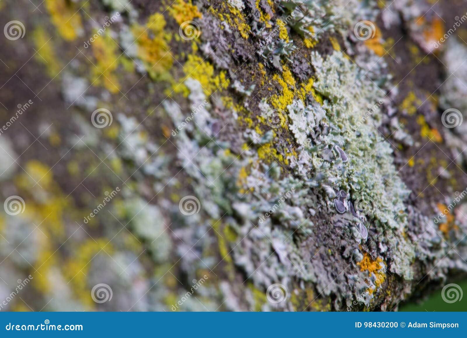 μύκητας