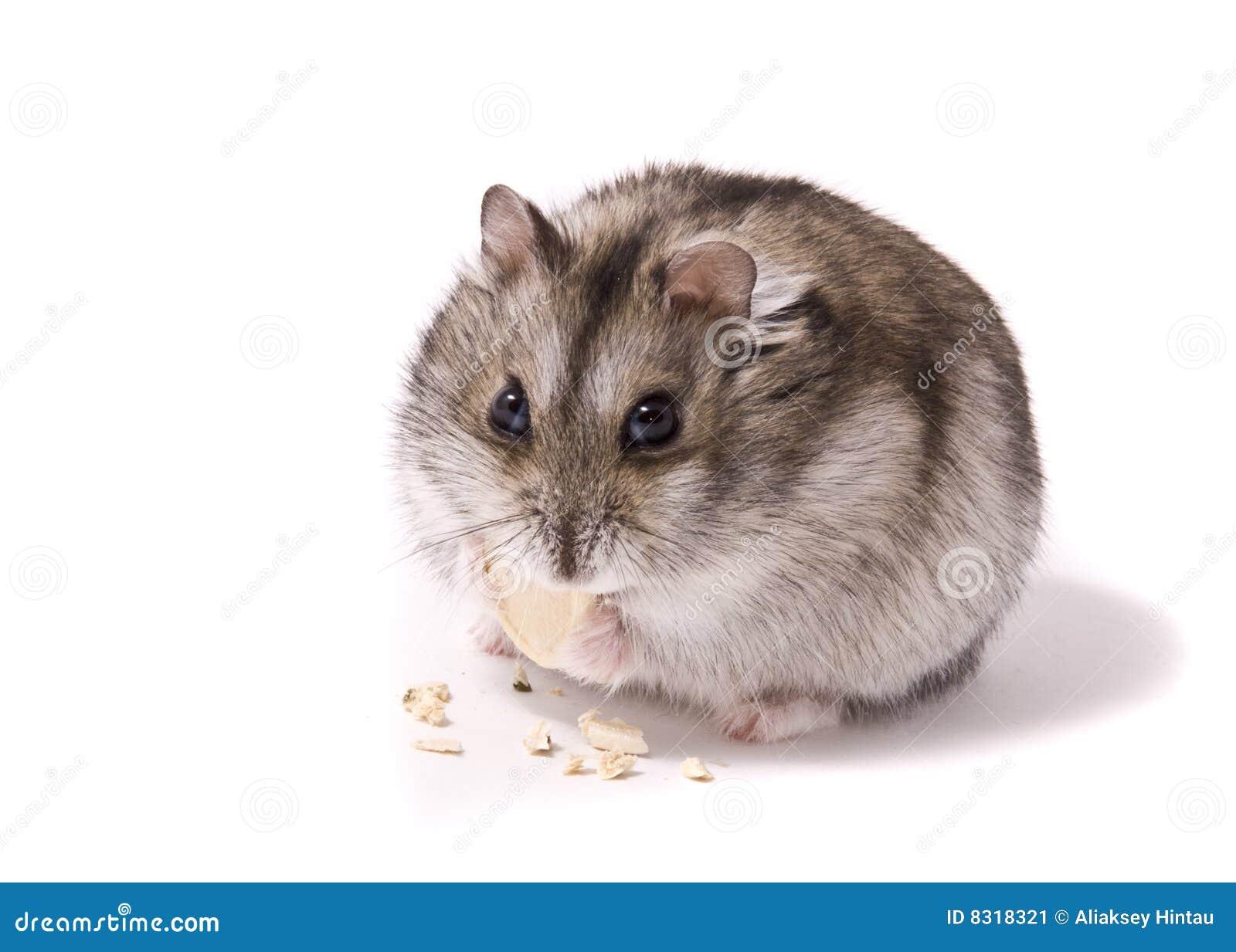 νάνα τρώγοντας χάμστερ λίγ&omicron