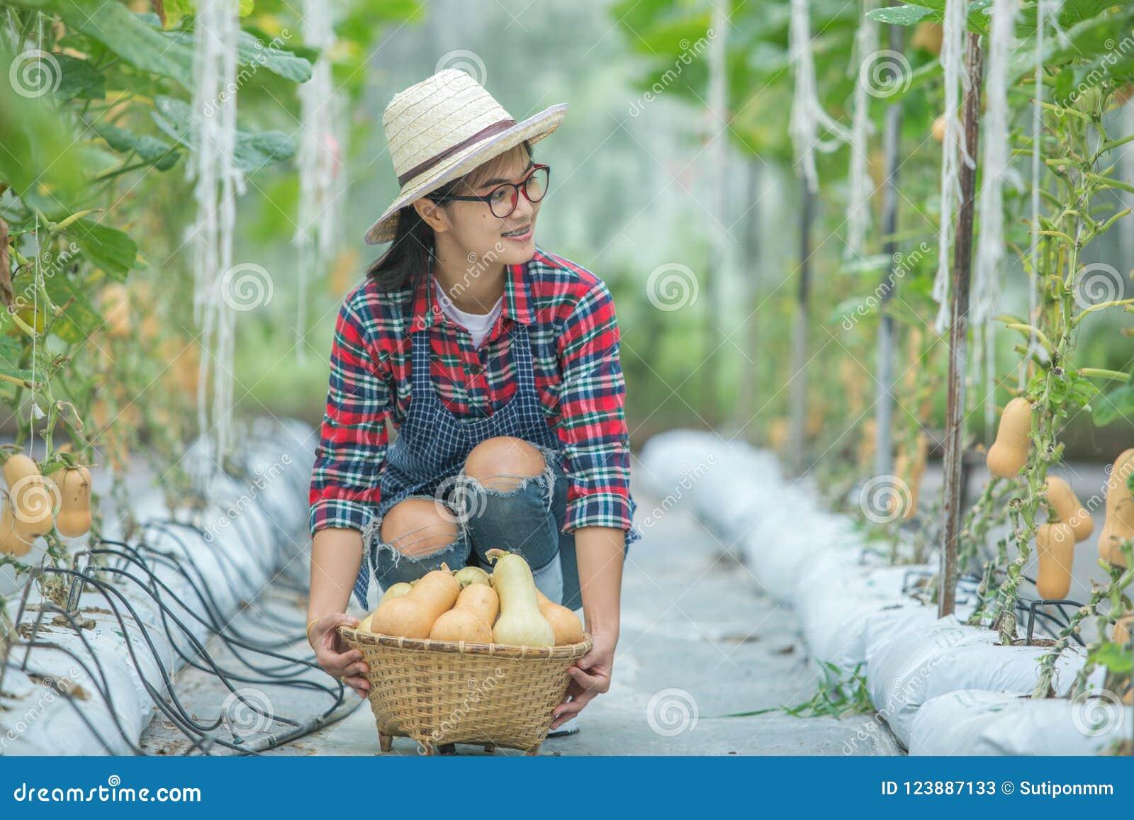 Νέα γυναίκα σε ένα θερμοκήπιο με τη συγκομιδή κολοκύνθης butternut