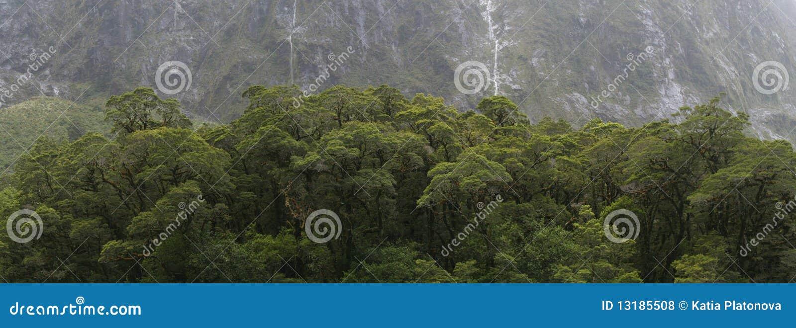 νέα δέντρα Ζηλανδία