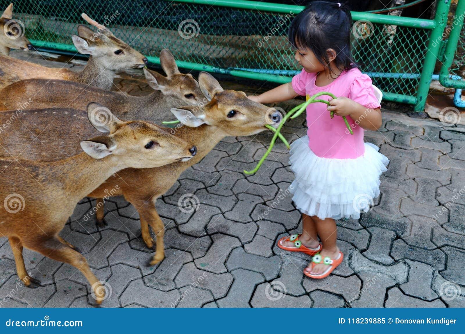Νέο ασιατικό κορίτσι που ταΐζει τα νέα ελάφια
