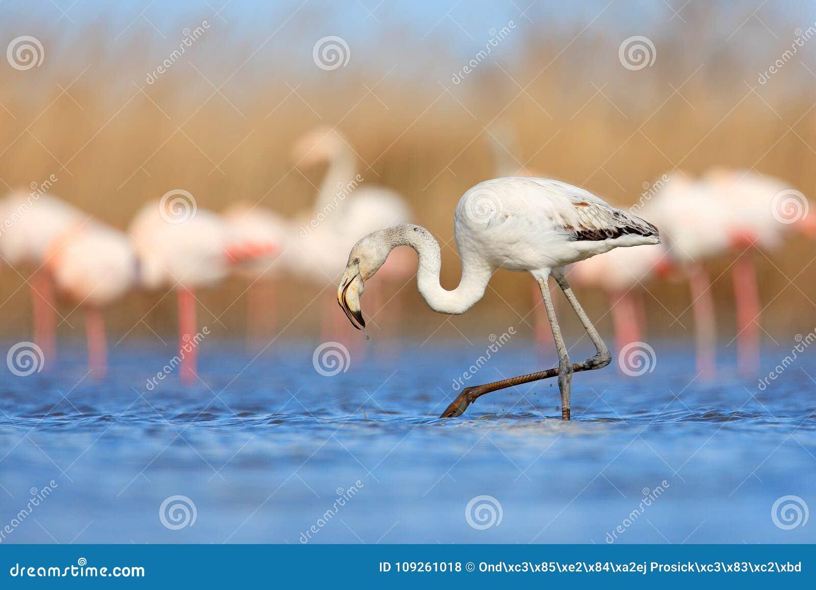 μεγάλο γαλλικό πουλί Desi κολλέγιο κορίτσια πορνό
