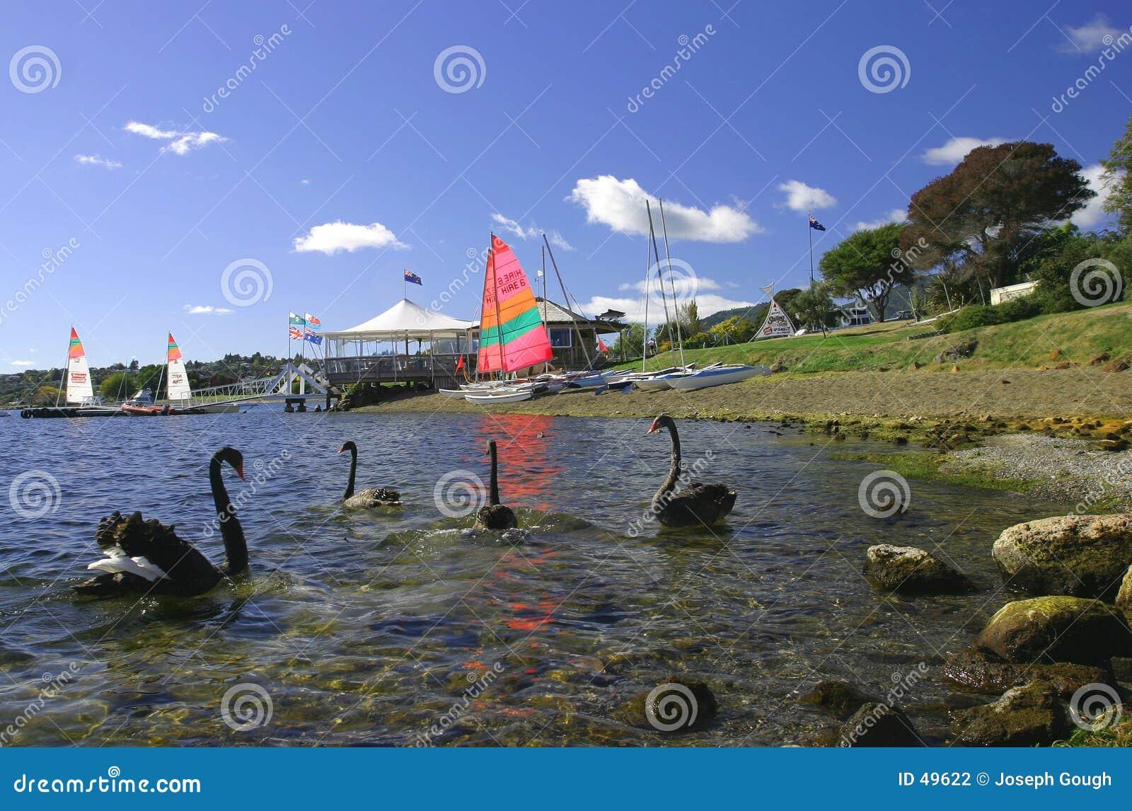 νέο taupo Ζηλανδία λιμνών