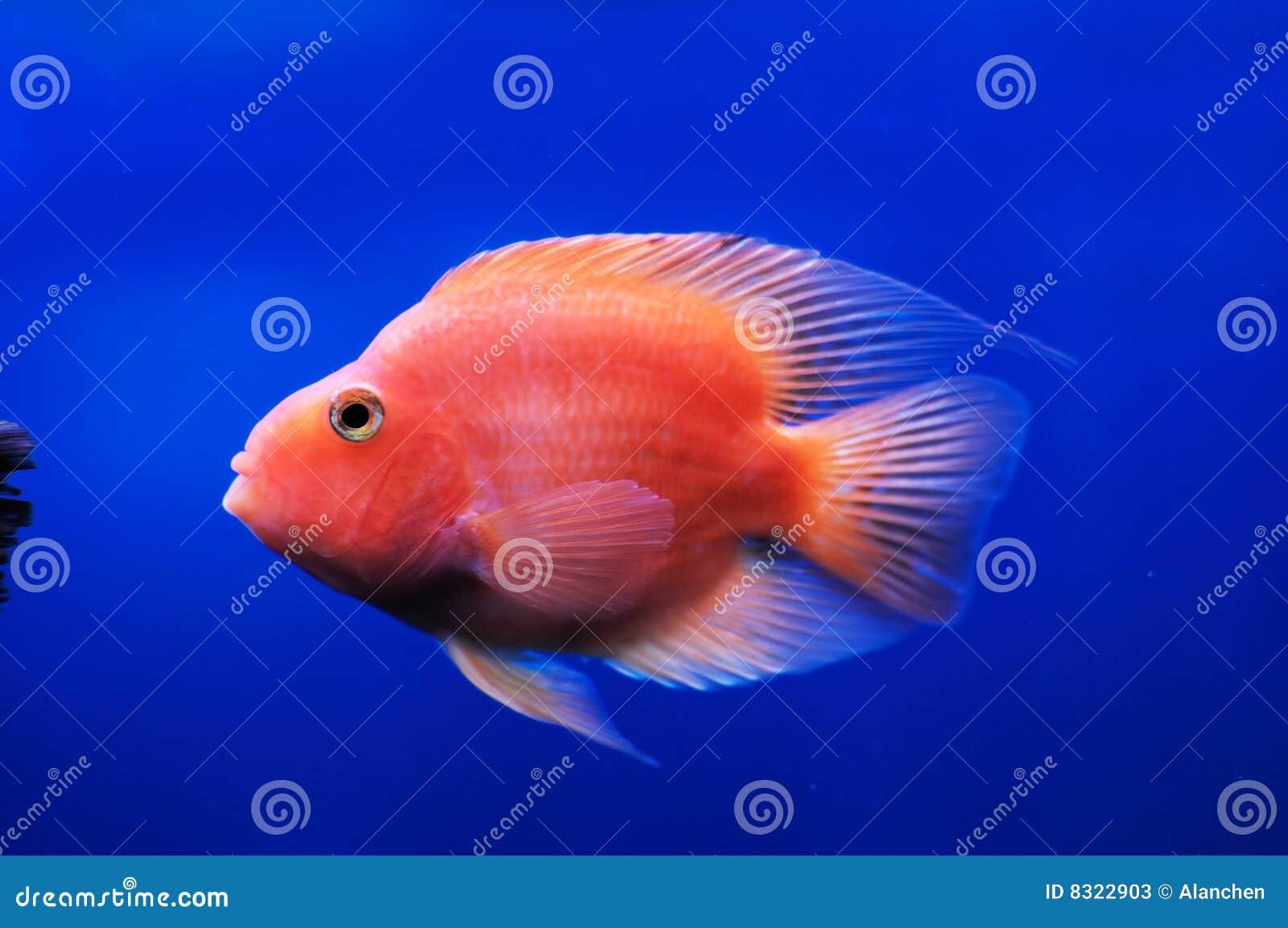 ναυτικό ψαριών