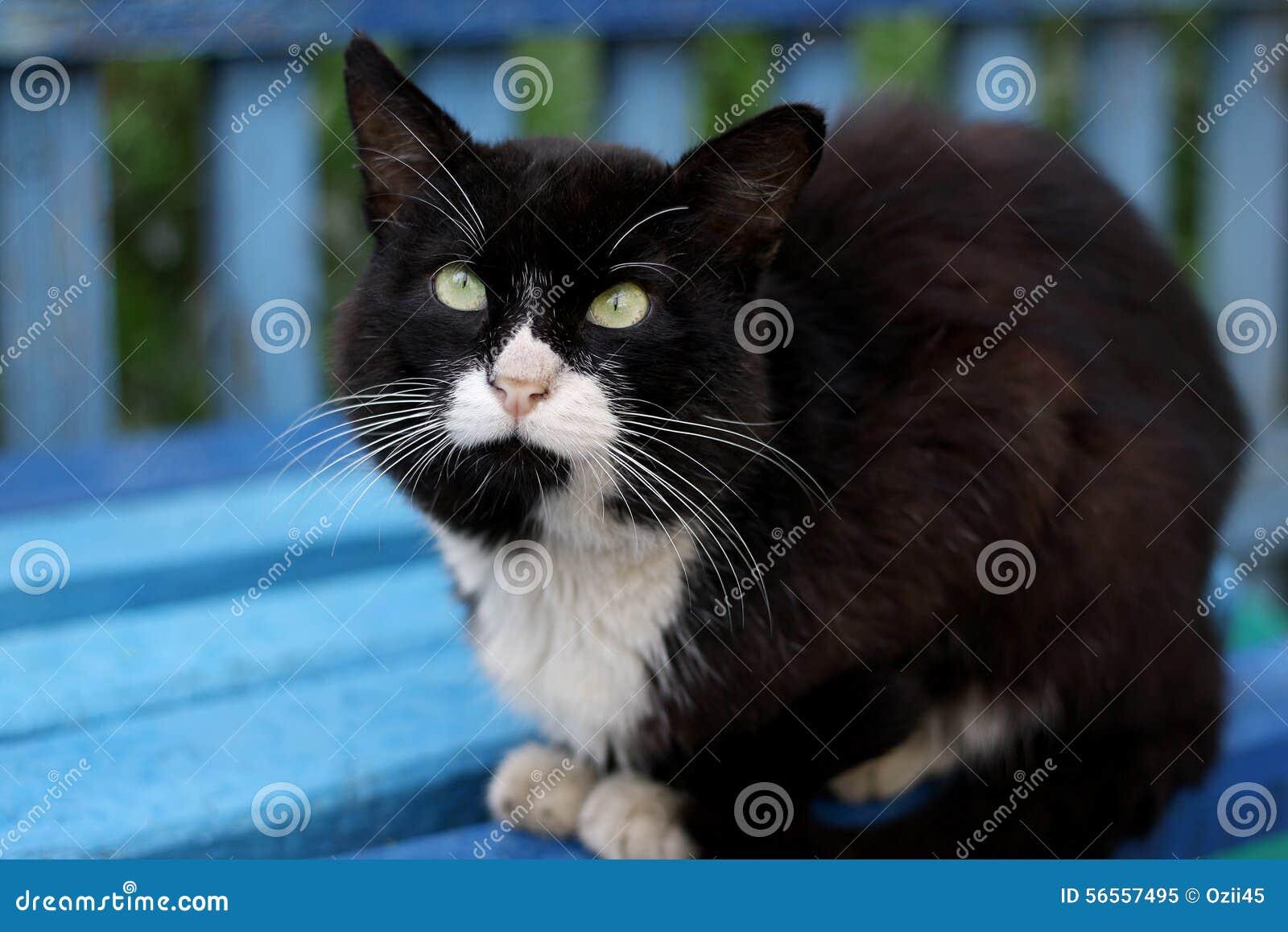 Download Να βρεθεί γάτα στοκ εικόνα. εικόνα από γάτα, θηλαστικό - 56557495