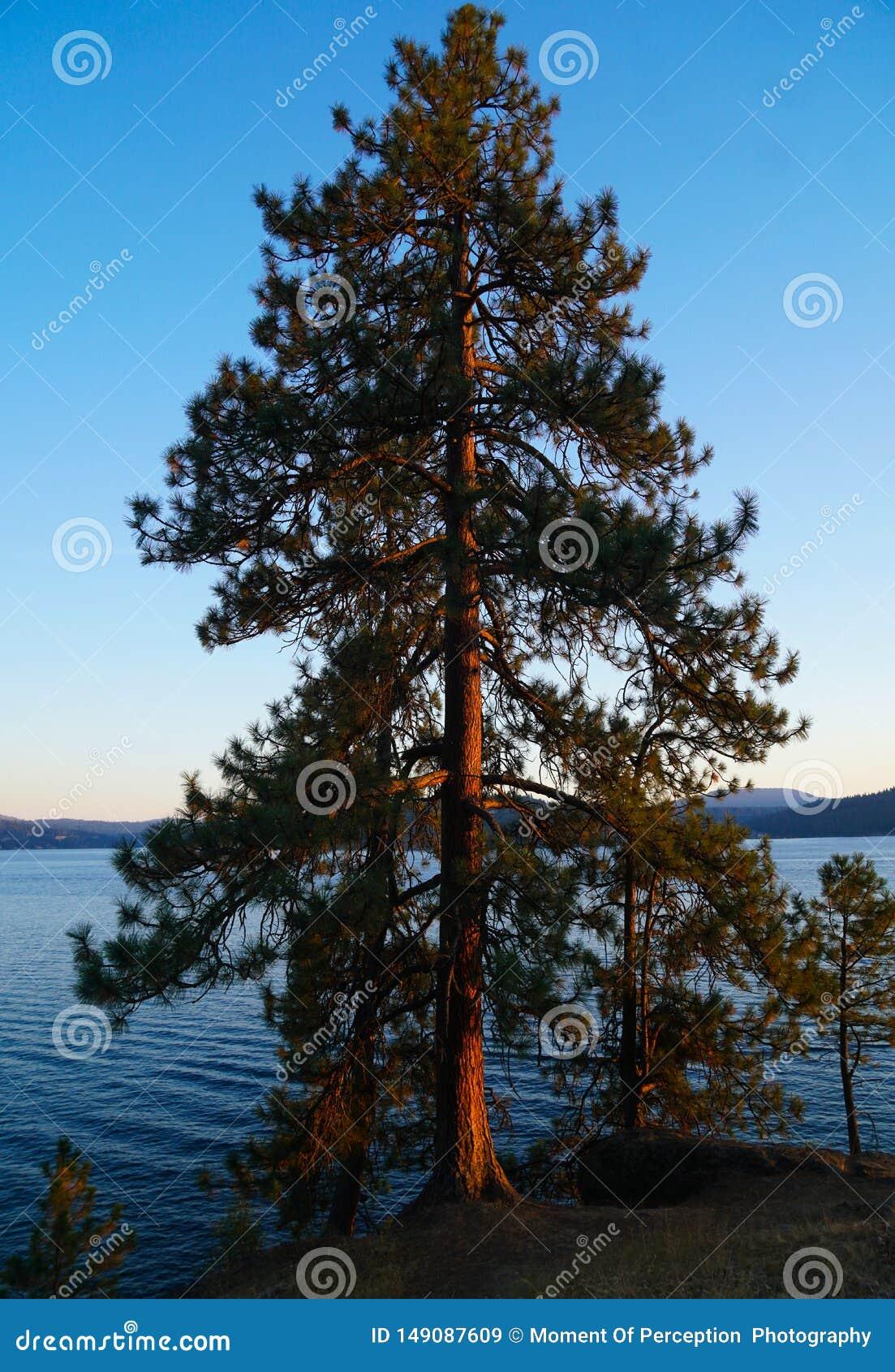 """Να κρεμάσει έξω από τη λίμνη σε Coeur Δ """"Alene"""