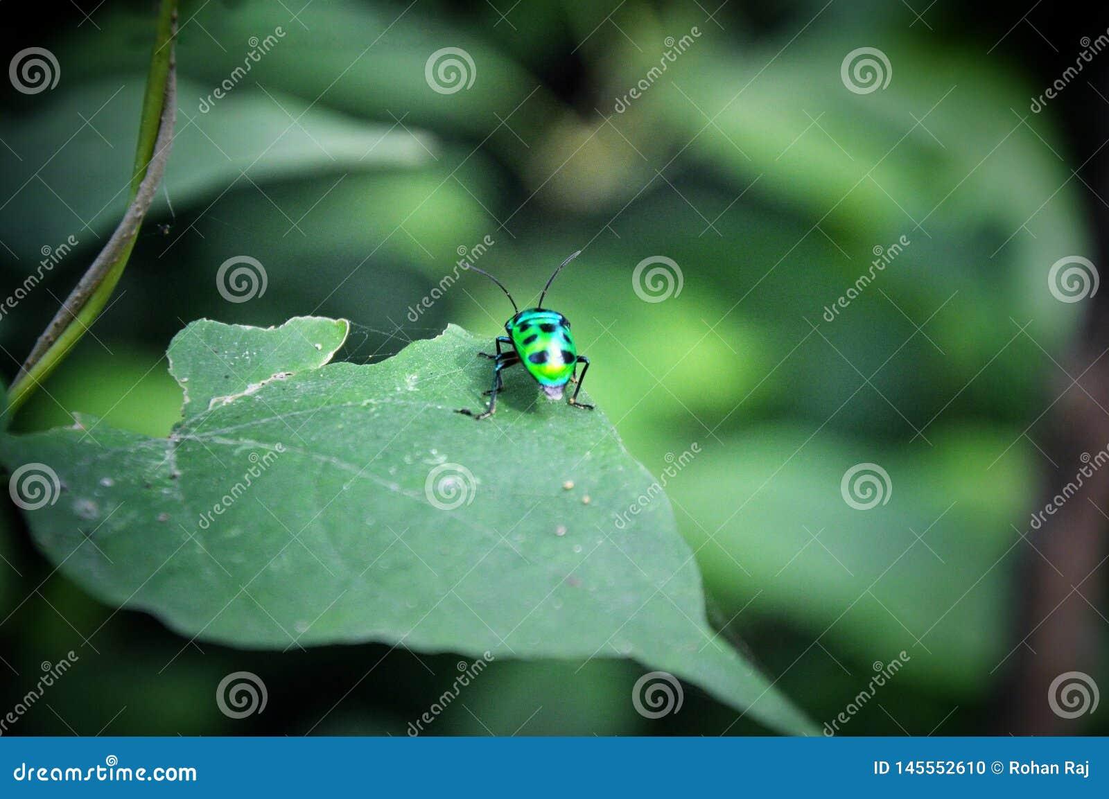 Να ορμήσει το έντομο με τη δροσερή τοποθέτηση