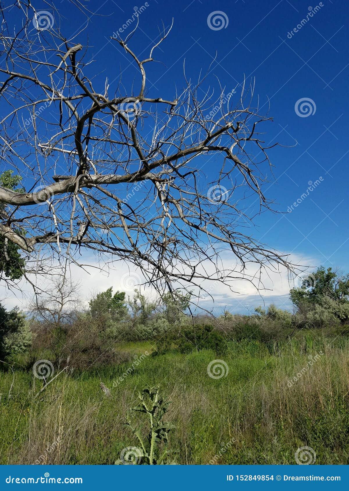 Νεκρά άσπρα σύννεφα μπλε ουρανού δέντρων