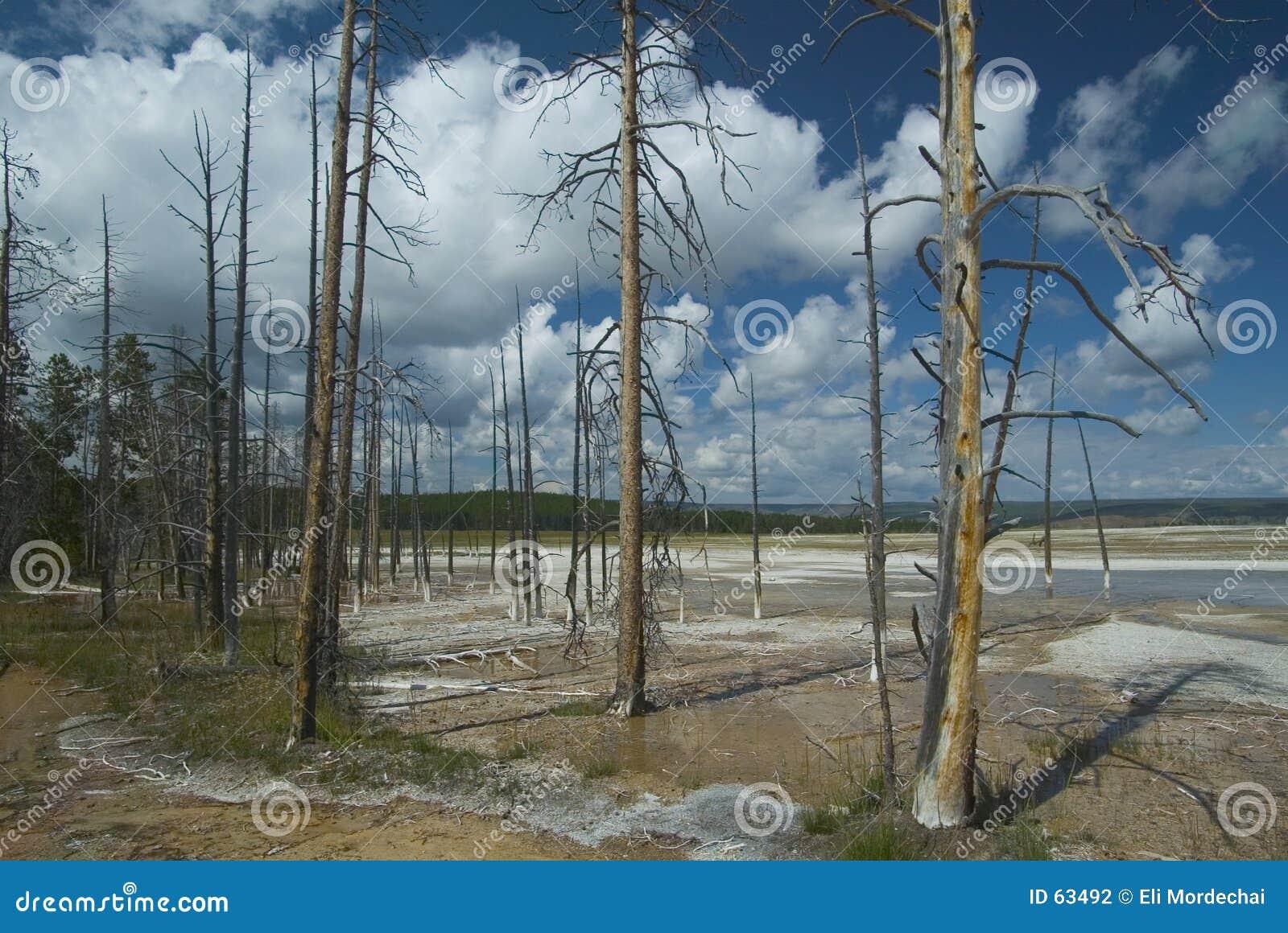 Download νεκρά δέντρα στοκ εικόνες. εικόνα από εθνικός, πάρκο, γραφικός - 63492
