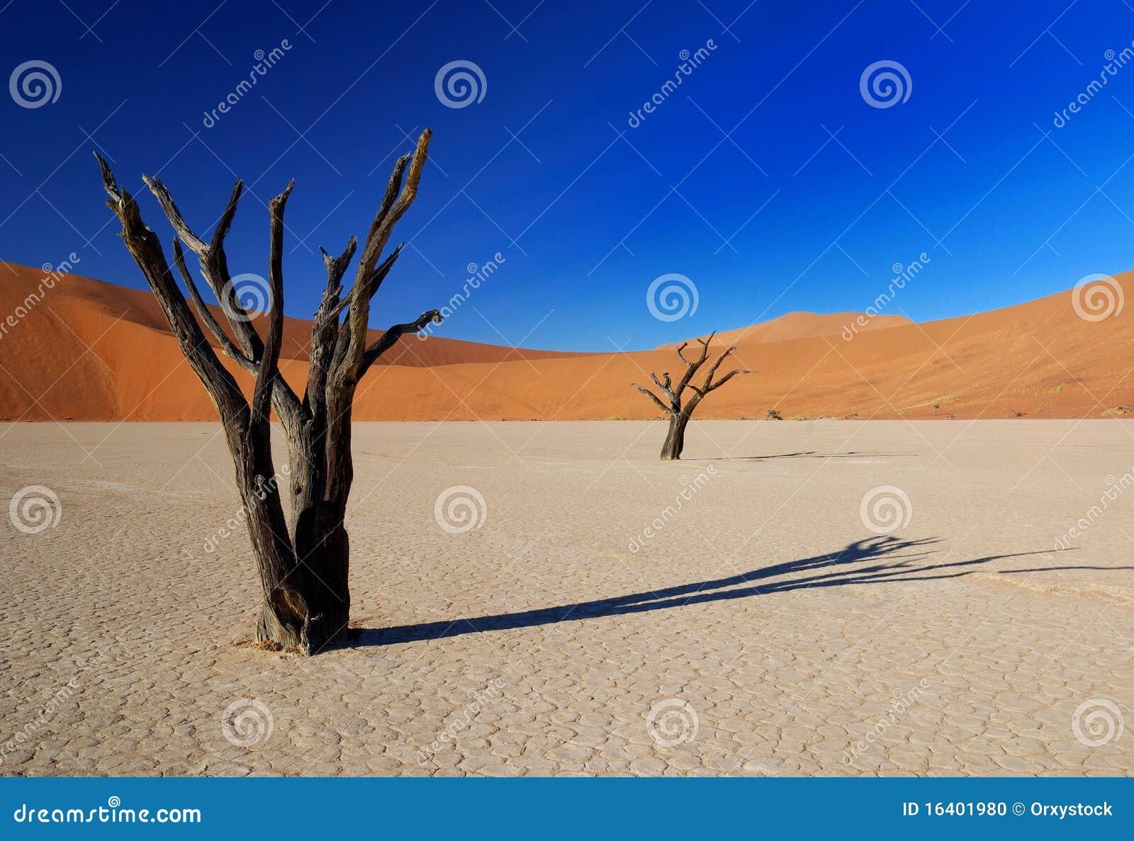 νεκρά δέντρα deadvlei