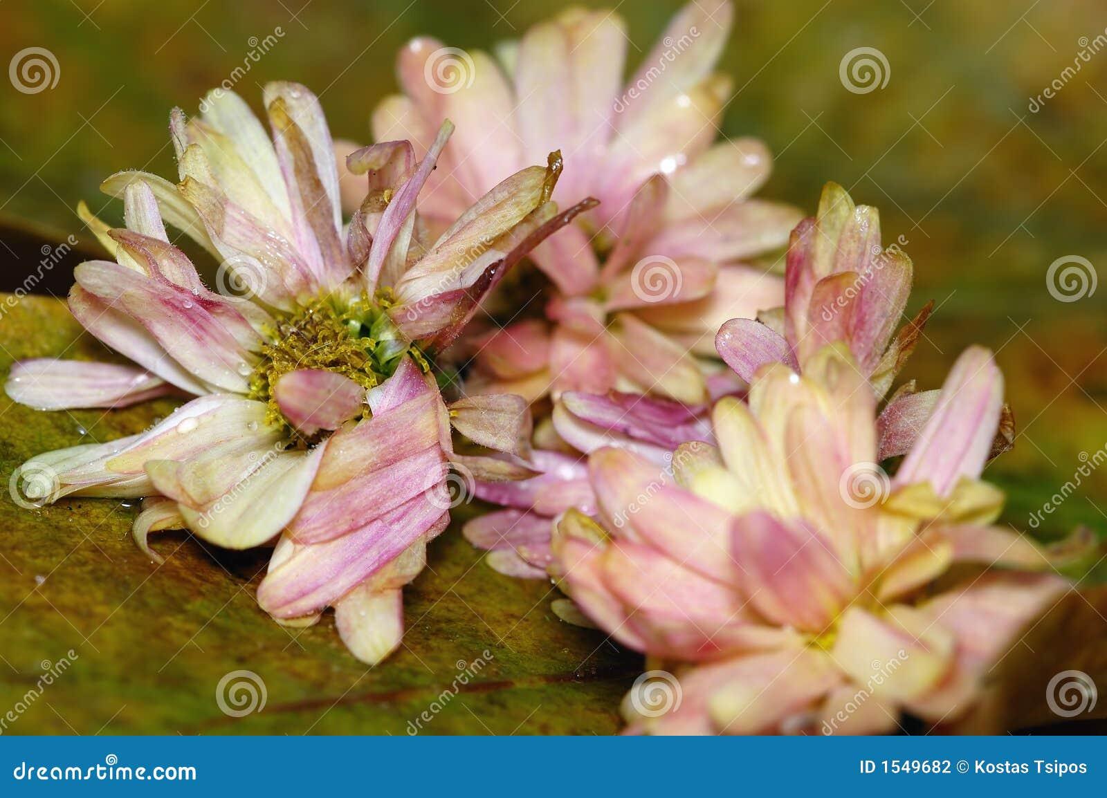 νεκρά λουλούδια