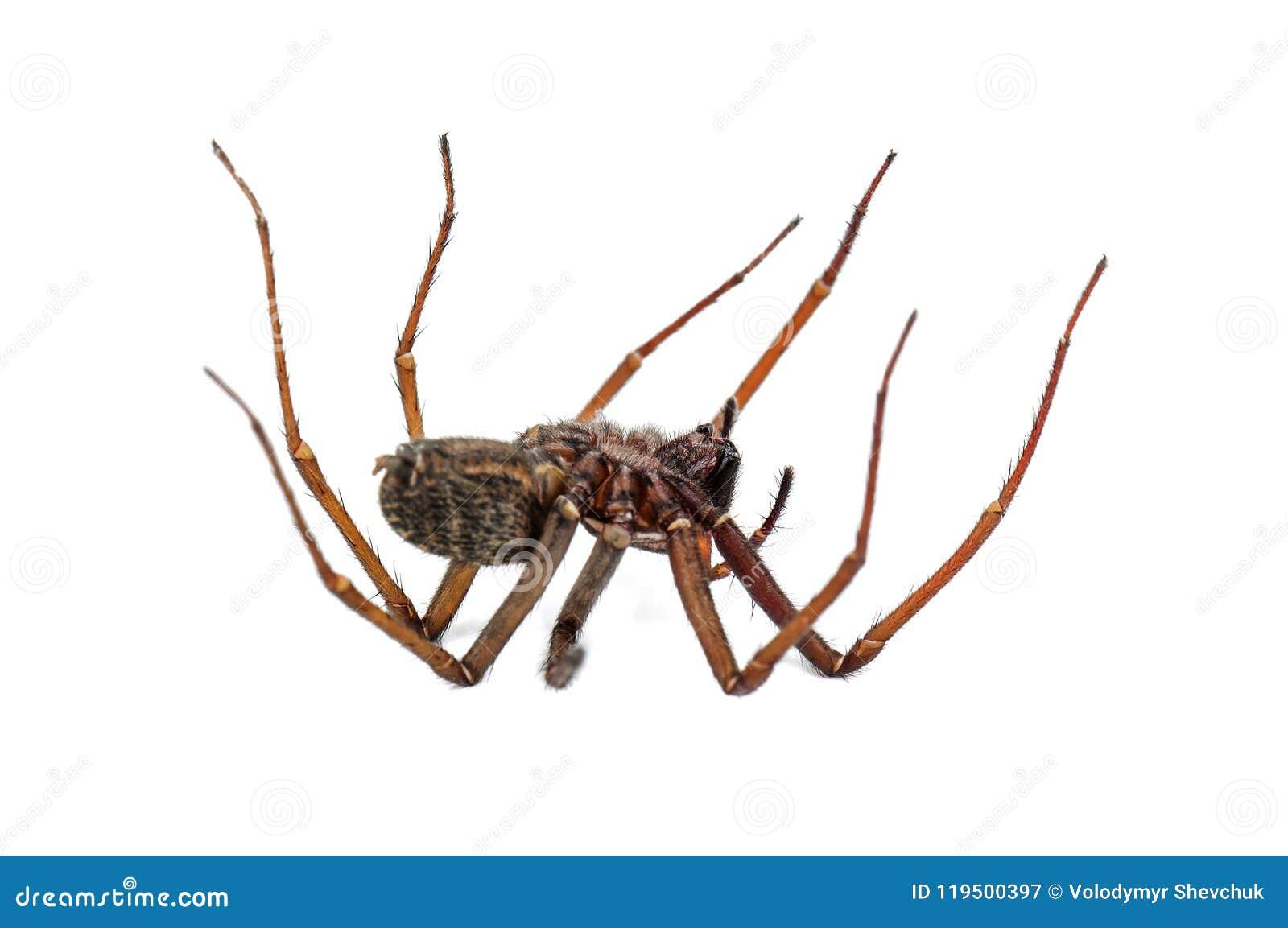Νεκρή αράχνη στο λευκό