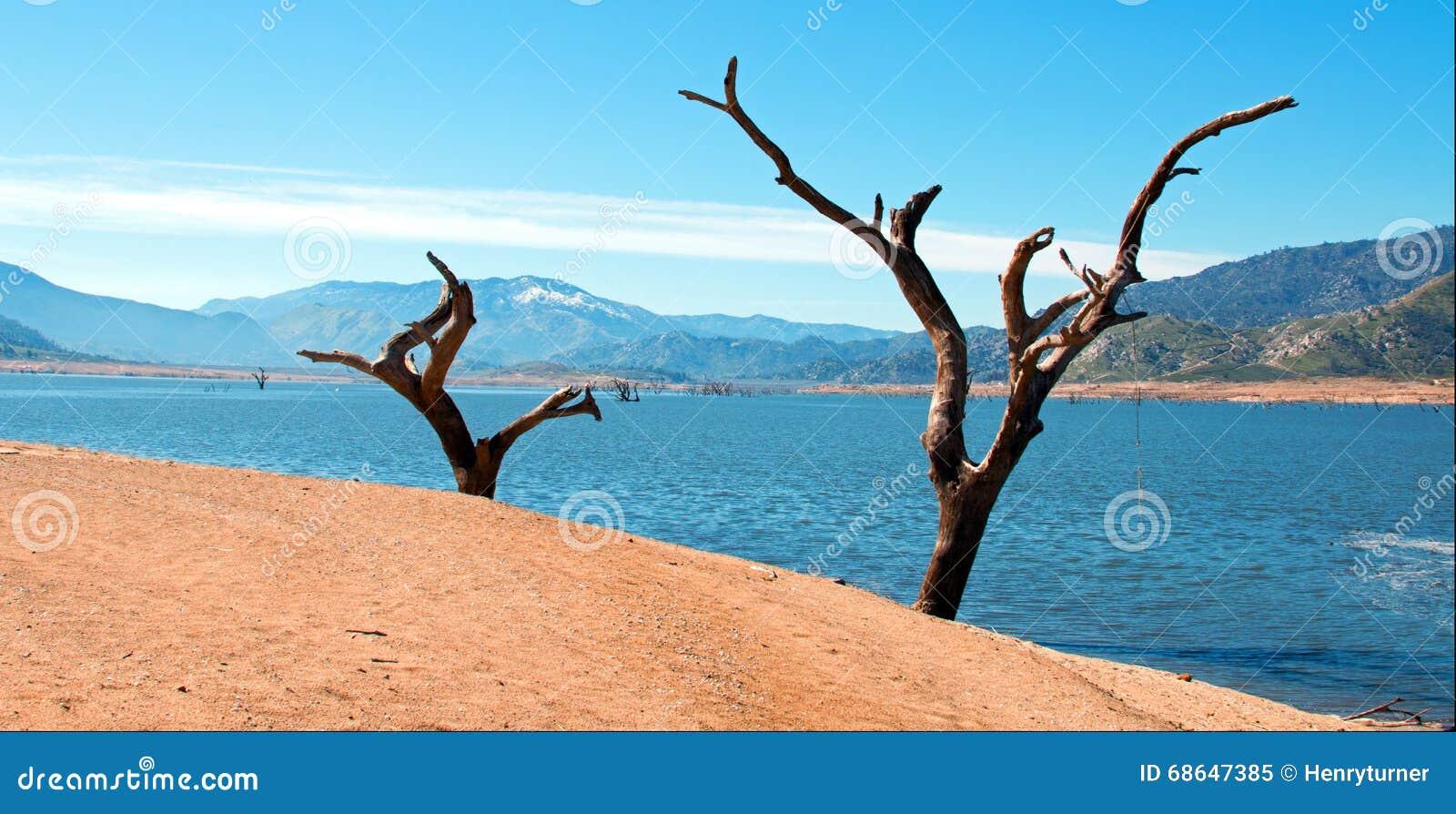 Νεκροί δέντρα και κορμοί κατά μήκος των όχθεων του Kern ποταμού όπου εισάγει το πληγε ν από την ξηρασία ασβέστιο της Isabella Καλ