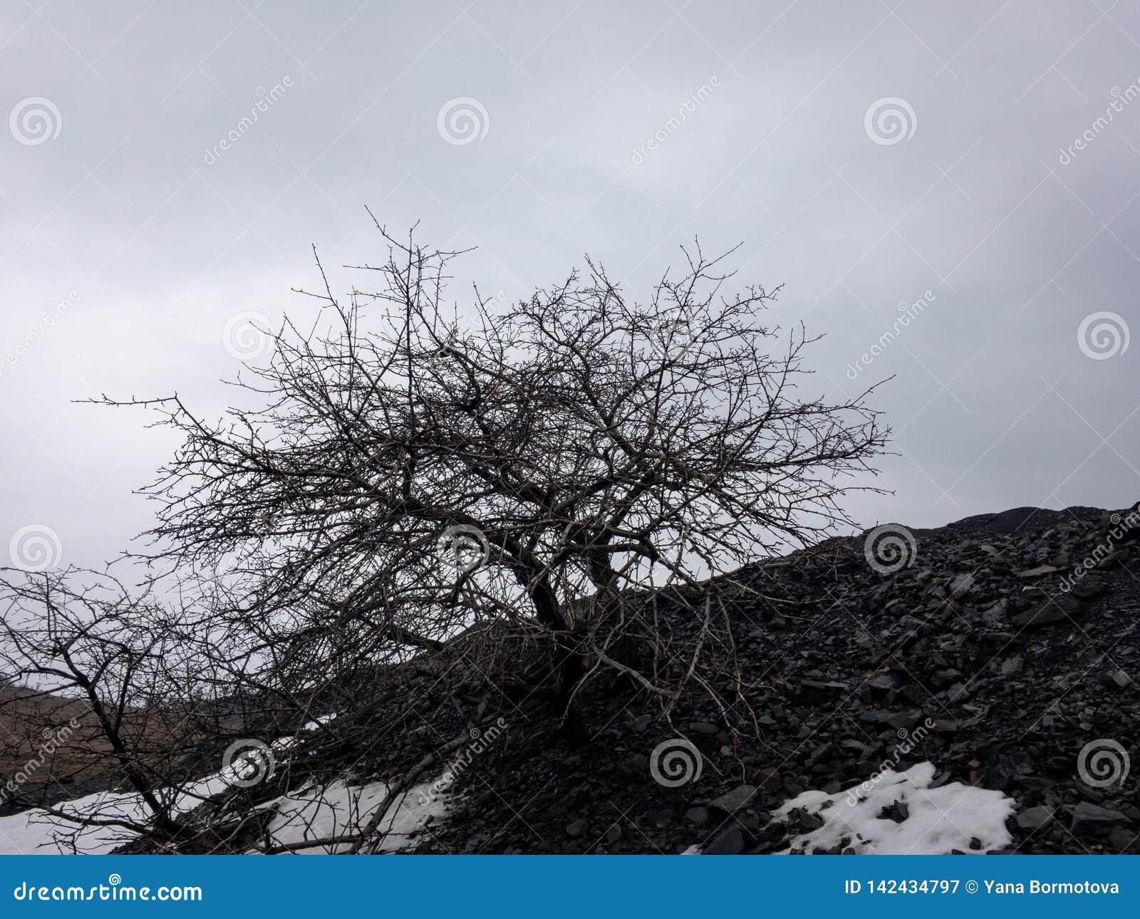 Νεκρό δέντρο στο μαύρο λόφο