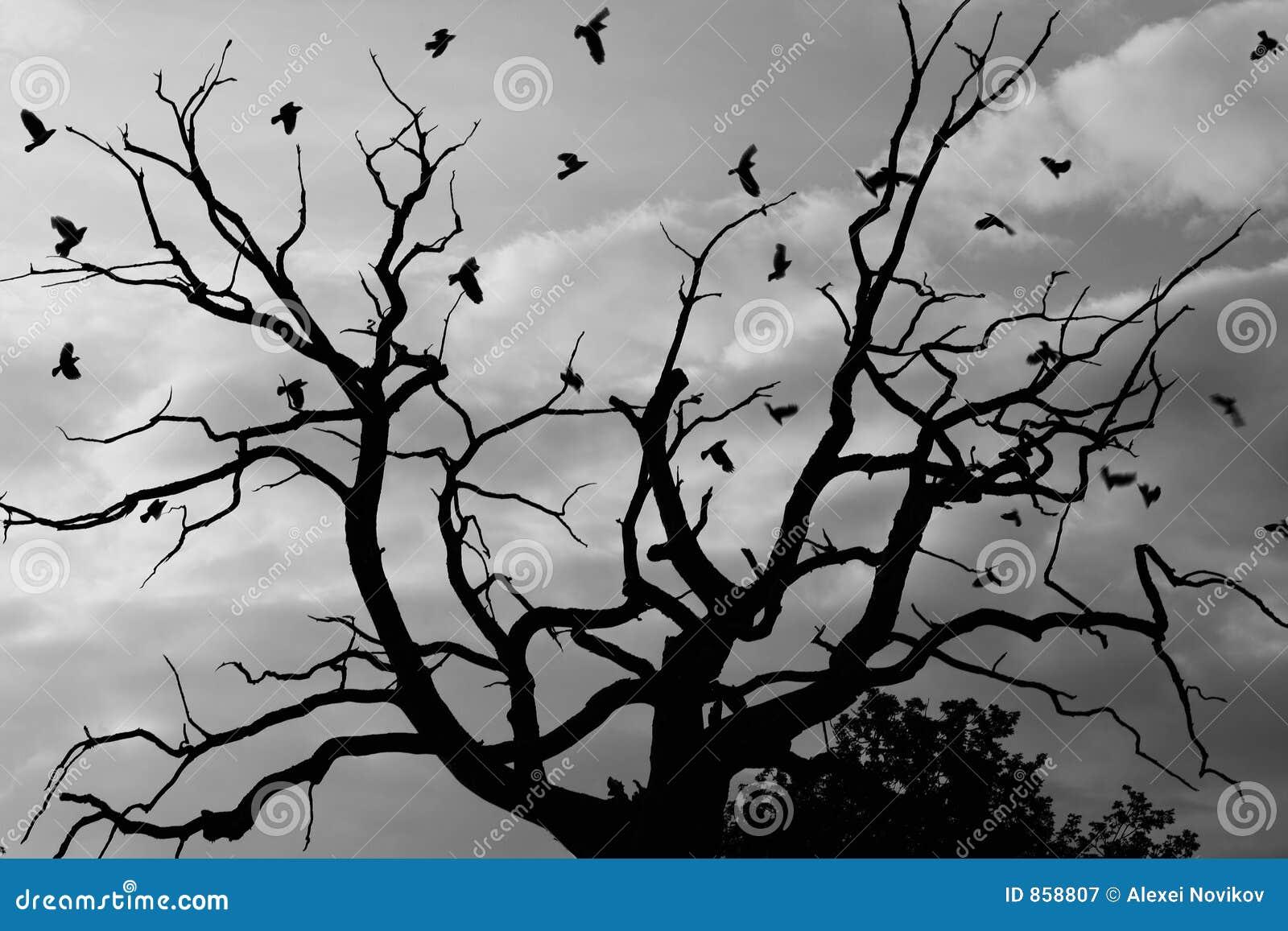 νεκρό θλιβερό δέντρο κορά&kappa