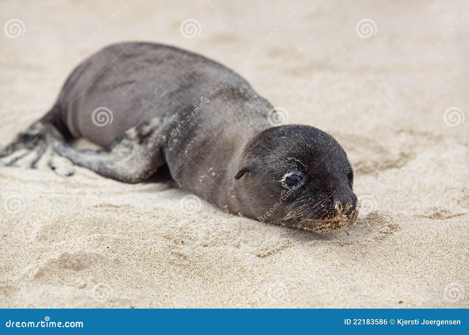 νεογέννητη θάλασσα λιον&tau