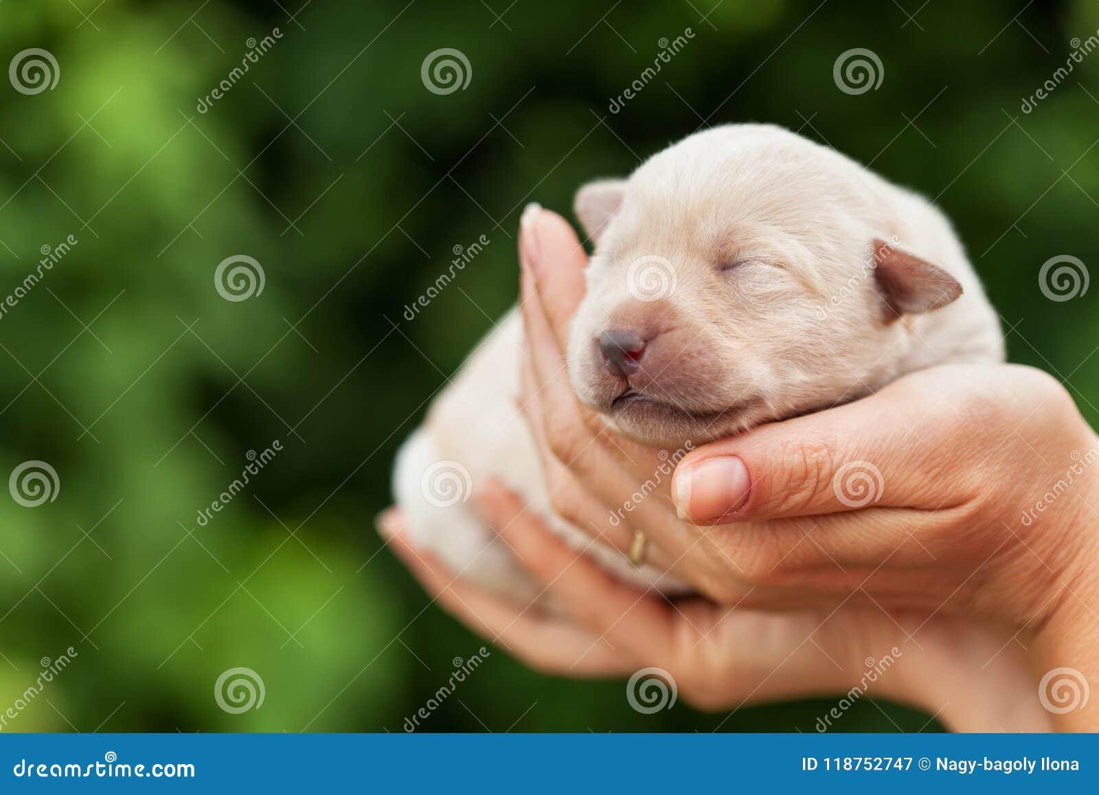 Νεογέννητο σκυλί κουταβιών στους φοίνικες γυναικών