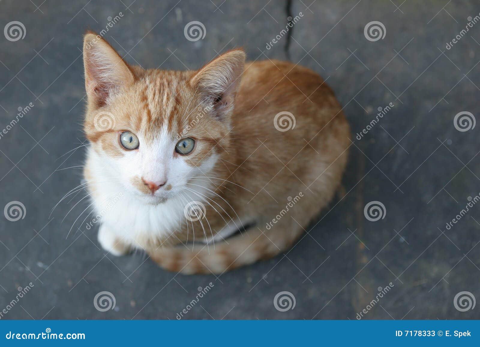 νεολαίες γατών